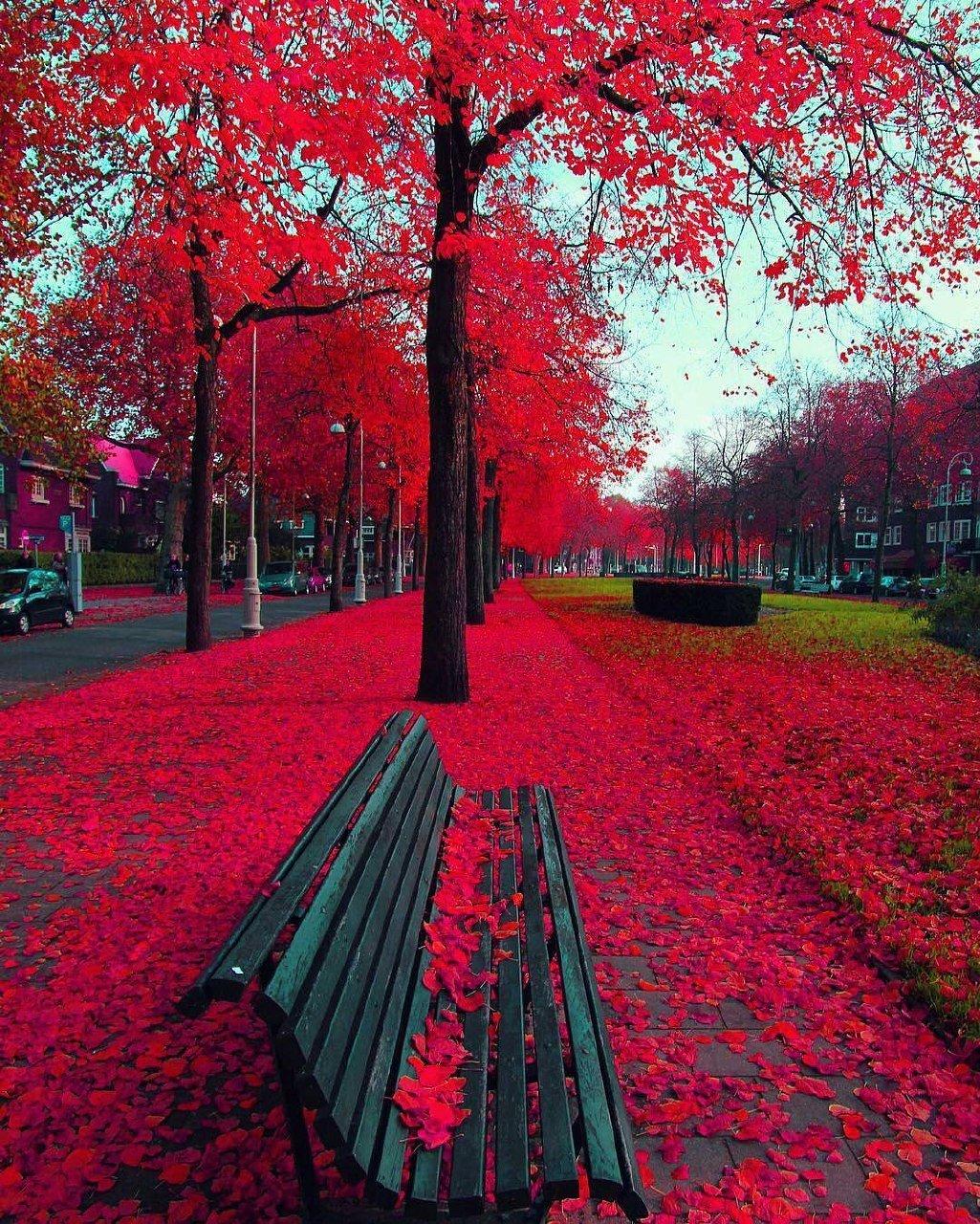 необычные картинки аллея красные деревья