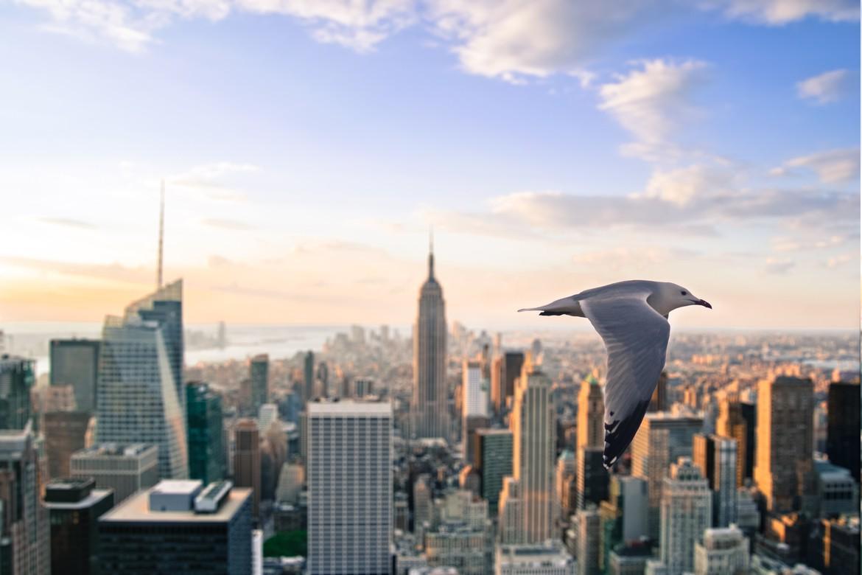 1170x780 Px Birds City Evening Flying Futuristic Landscape Lights Morning Nature Sky