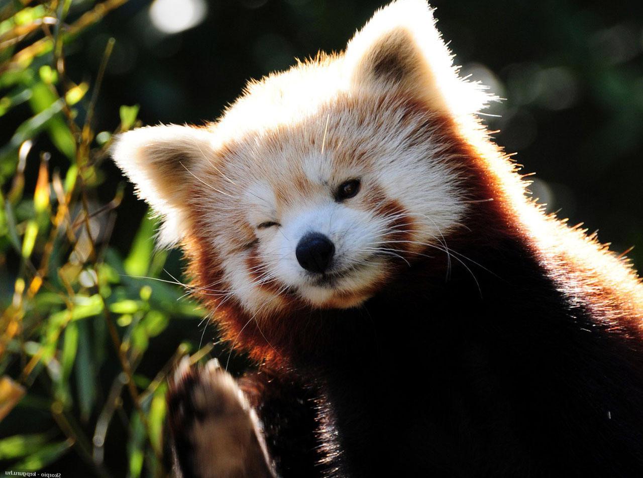 Hintergrundbilder : 1280x952 px, Tierbilder, Babytiere