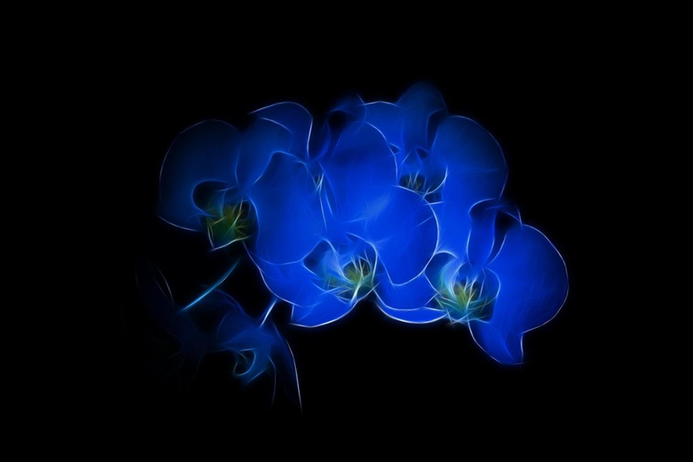 Wallpaper 1400x933 Px Black Background Blue Flowers