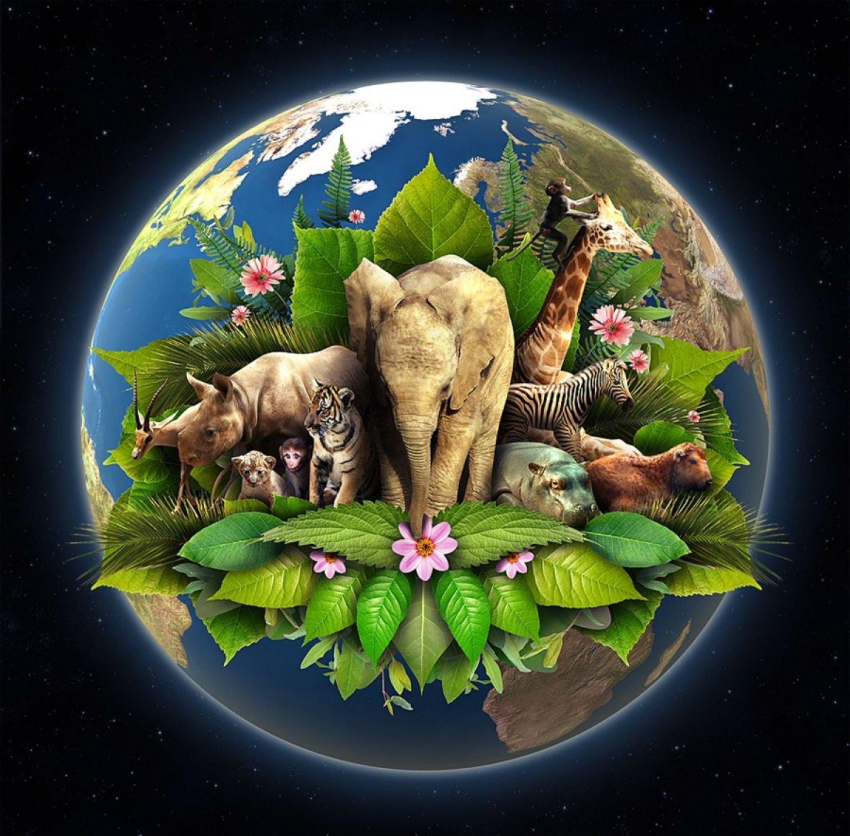 животные планеты земля картинки гибели бывшего народного
