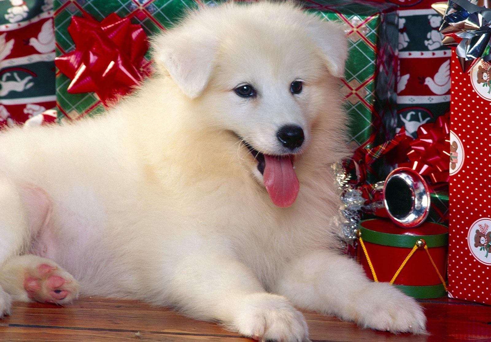 Sfondi 1600x1116 px immagini animali cuccioli for Animali desktop