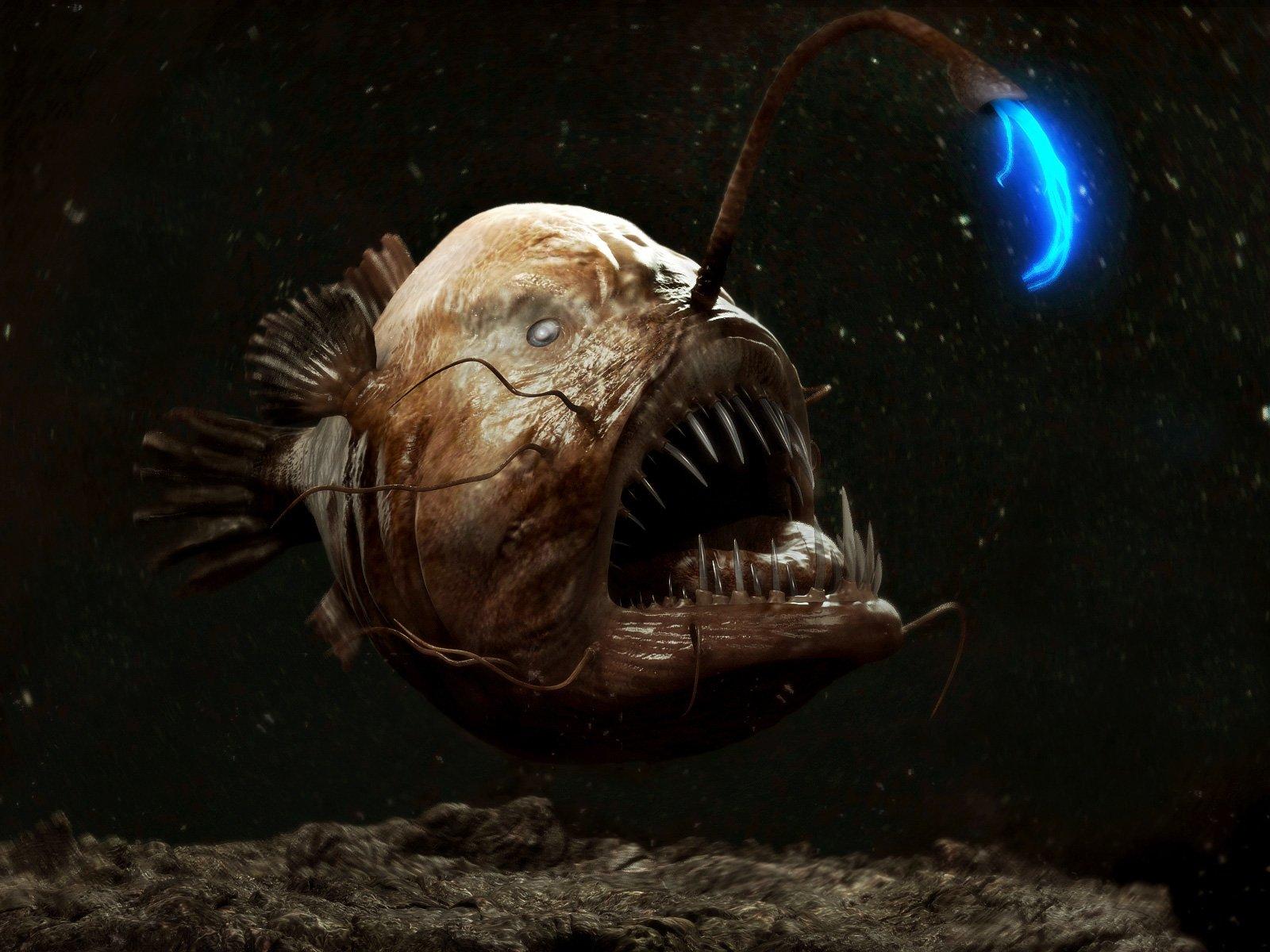 глубоководные рыбы марианской впадины фото спинозавр выжили наших