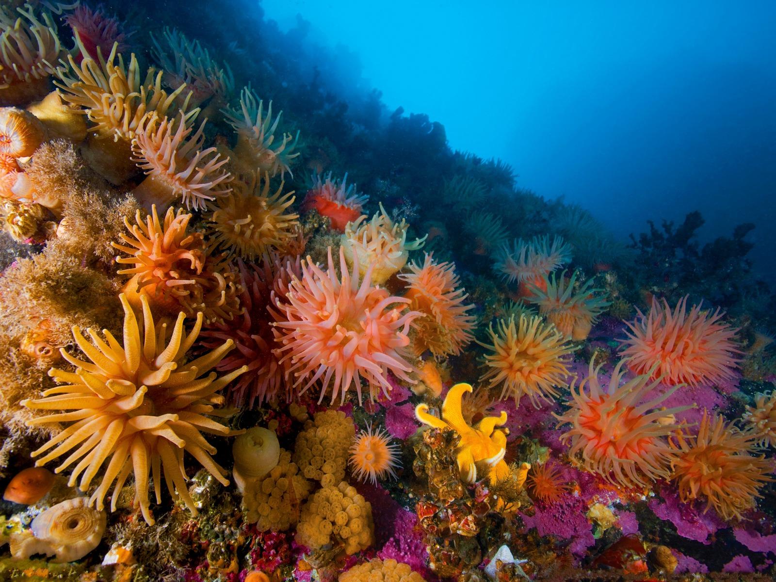 решила красивые фотографии морского дна тут виде арки
