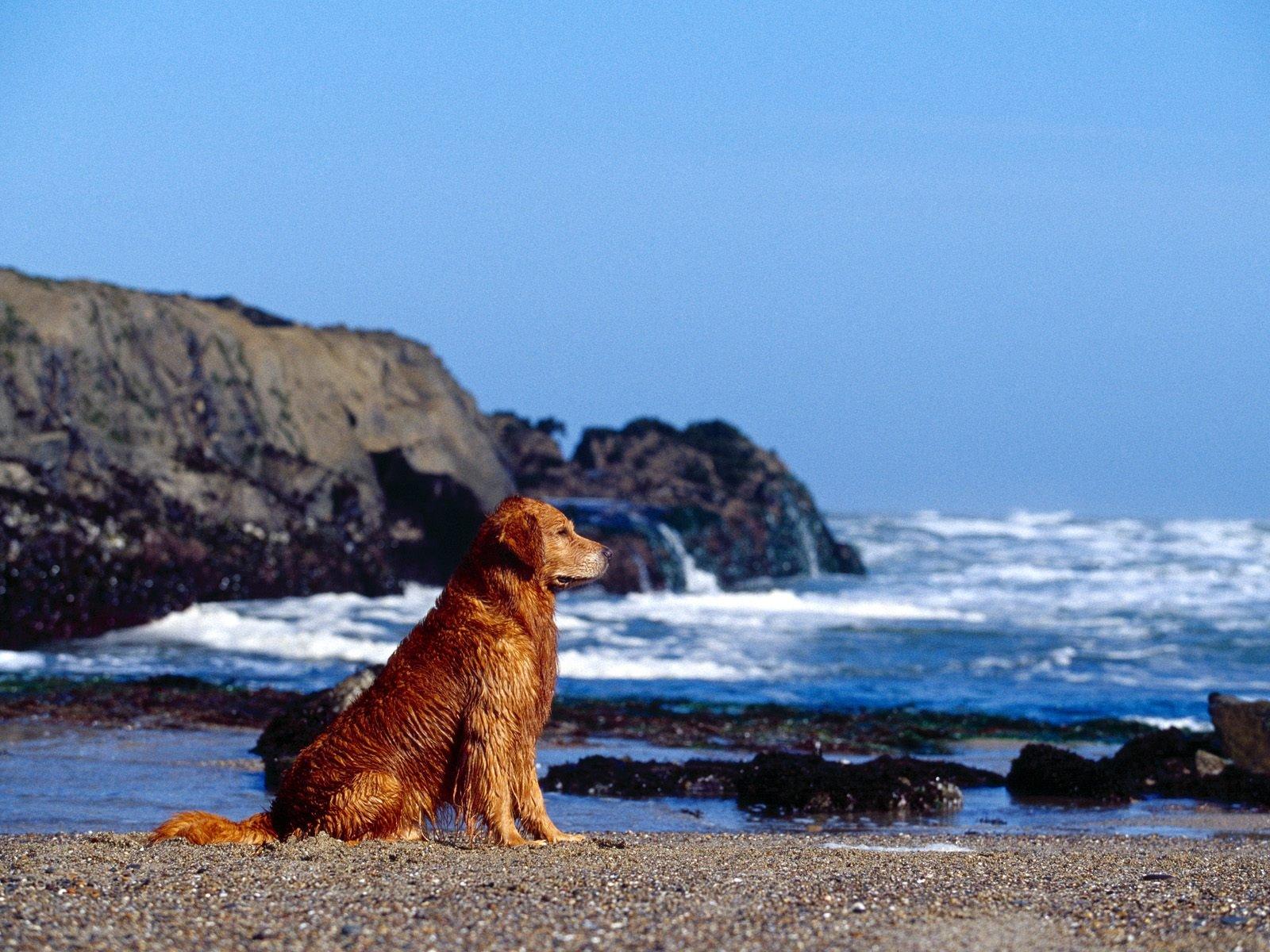 デスクトップ壁紙 1600x1200 Px 動物 可愛い 犬 Frendly ペット