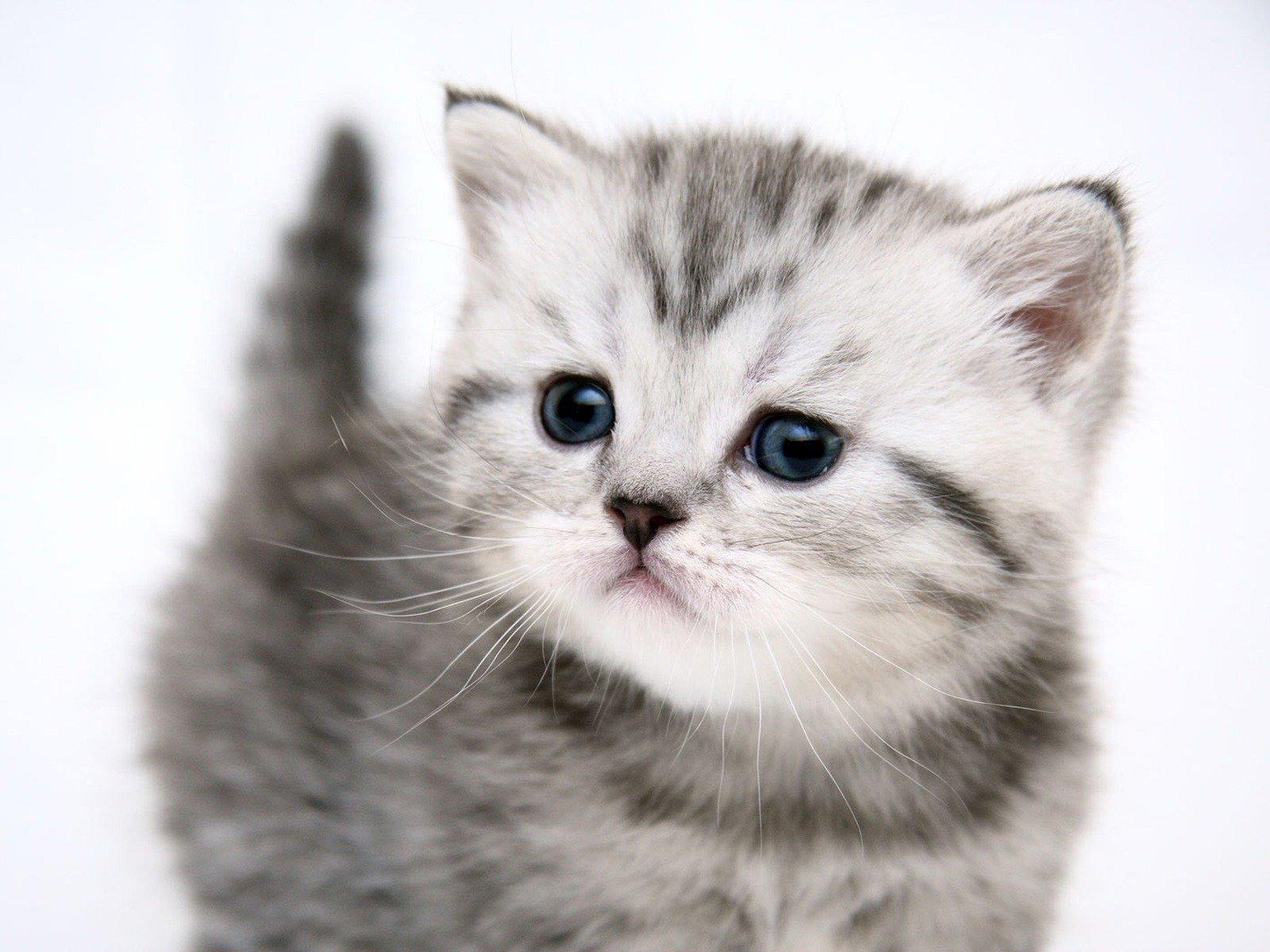 Красивые картинки милые котята