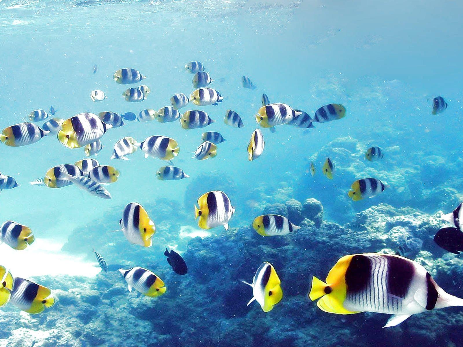 ryby v moři zdarma radiometrická věda o vytváření datování