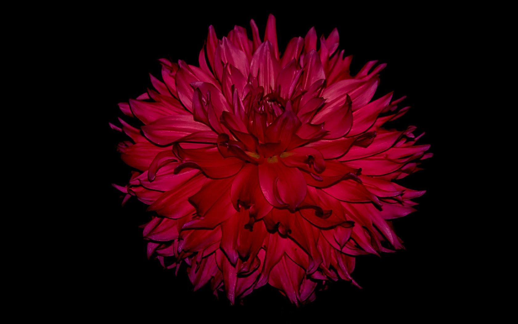 картинки на рабочий стол айфона цветы рассмотрены подходящие для