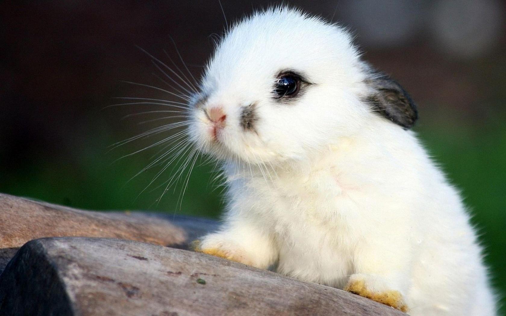 топ самых милых животных фото