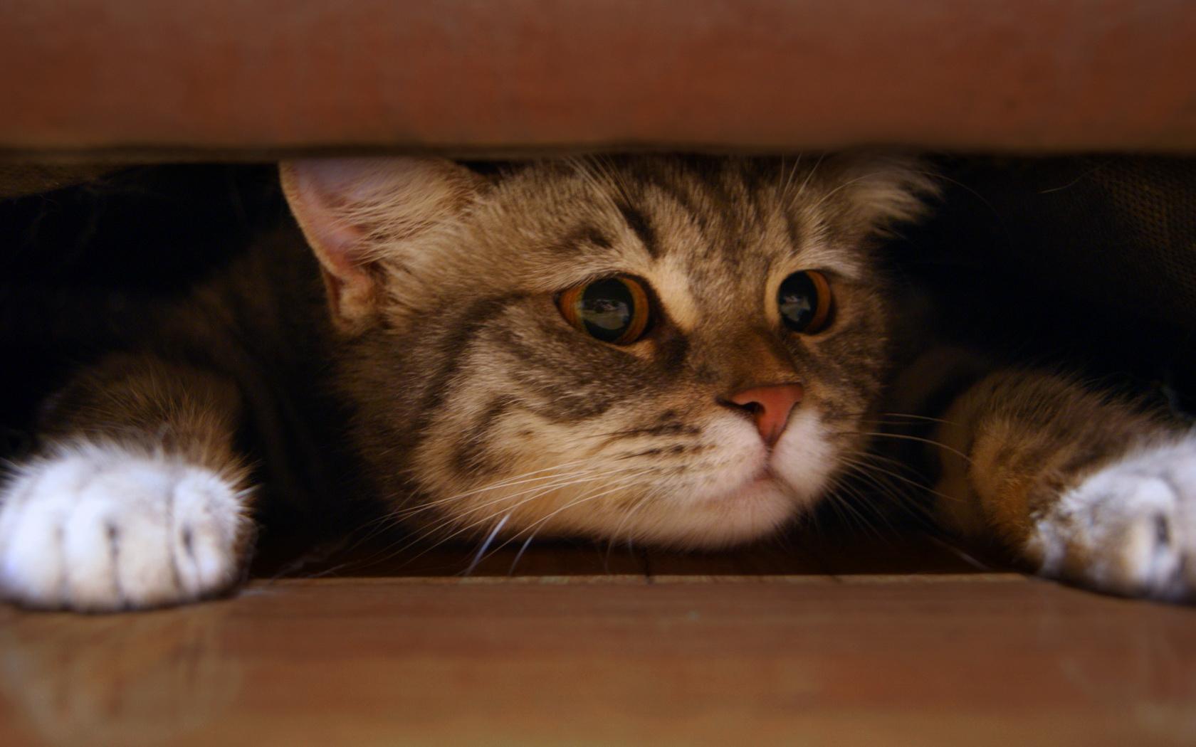 Картинка котик спрятался
