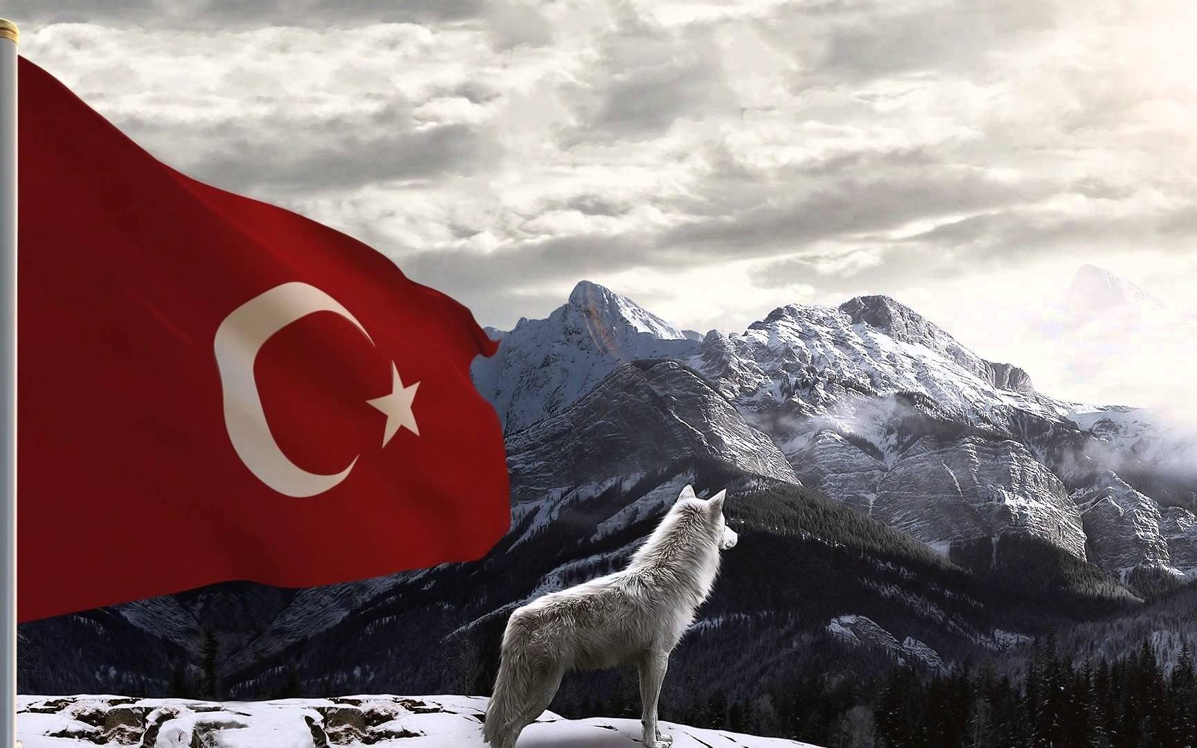 Masaüstü 1728x1080 Piksel Bozkurt Türkiye Türk Kurt 1728x1080
