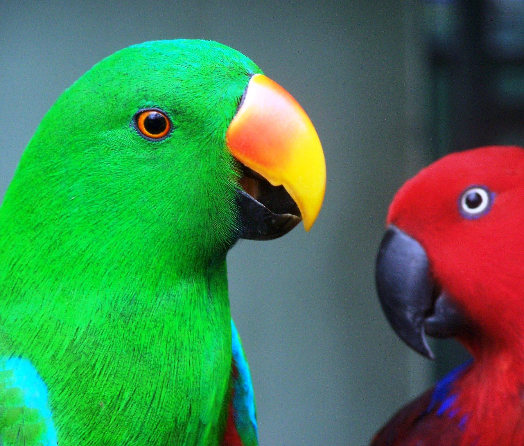 Все породы попугаев в картинках