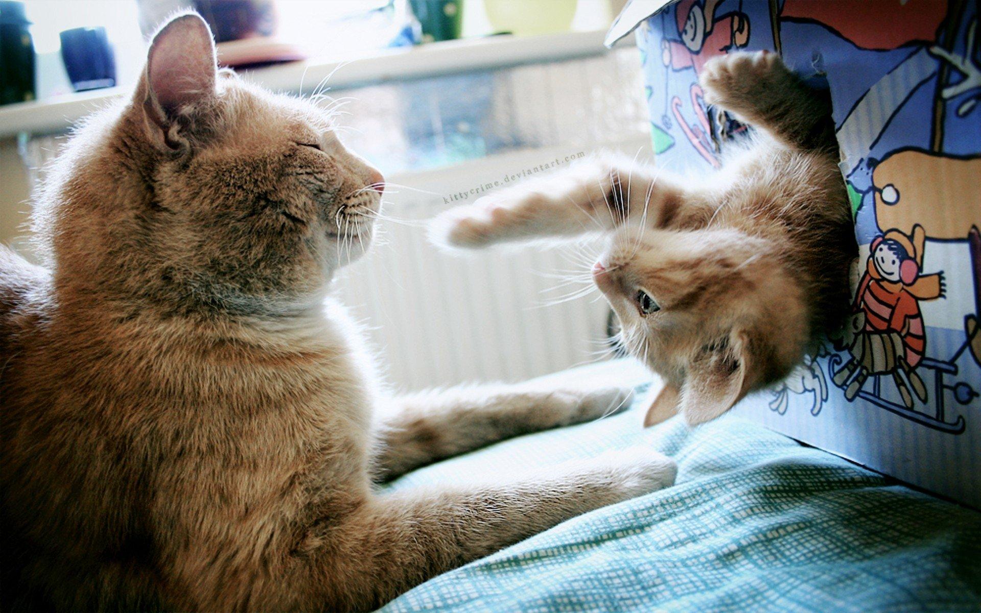 фото красивых котят с приколами коллекция порно такси