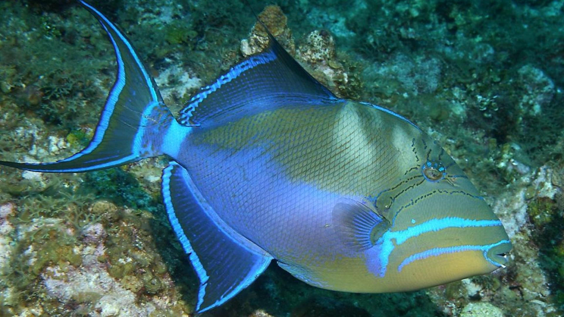 все часто названия и фото океанских рыб есть европейский