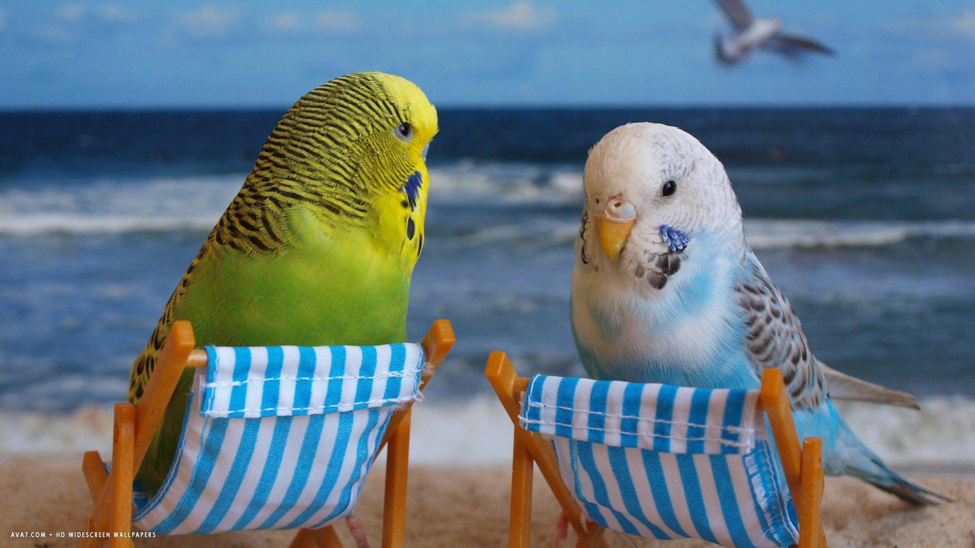 Любви, веселые картинки про попугаев
