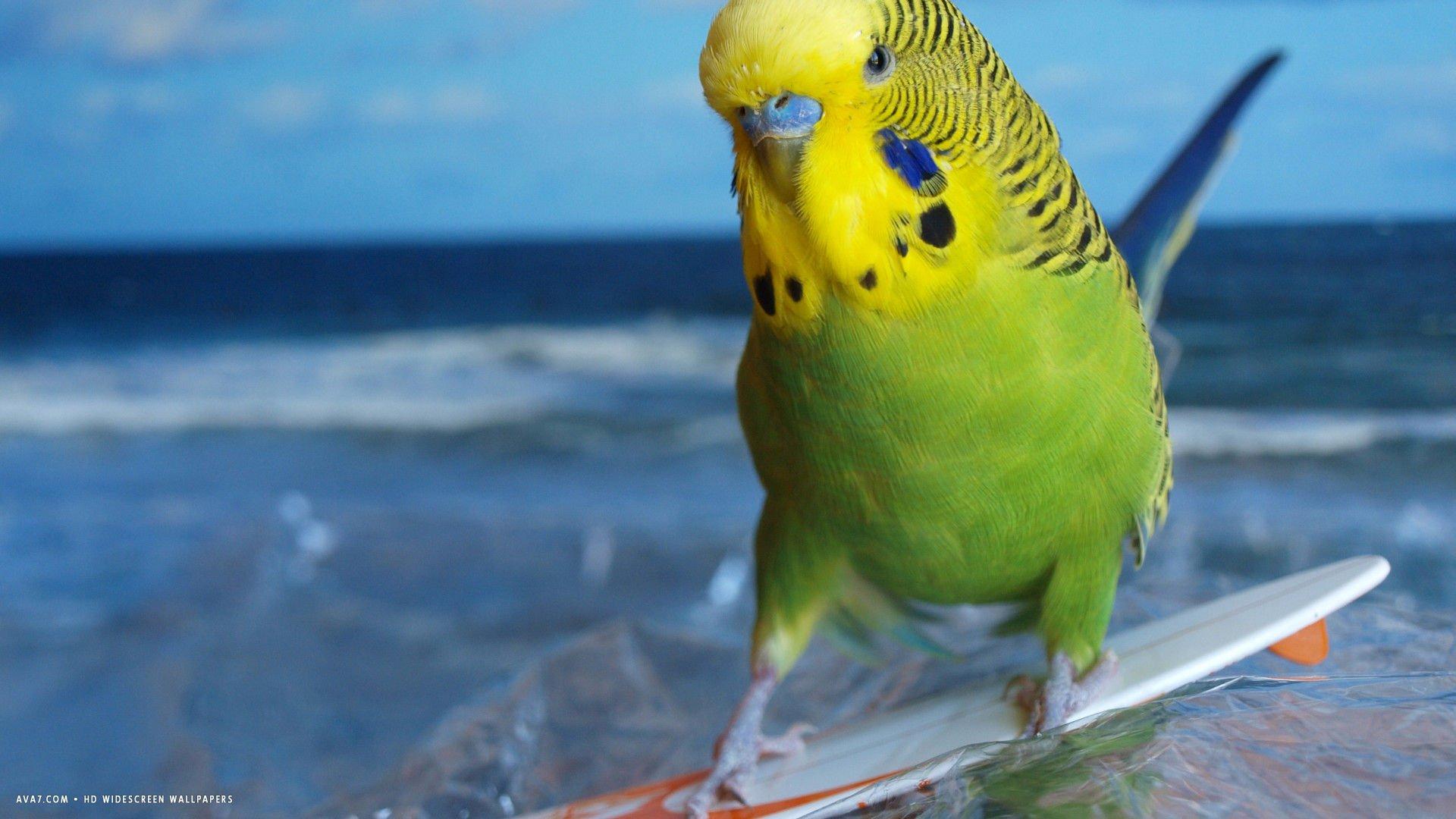 призму существа волнистый попугайчик прикол картинка объявления продаже или