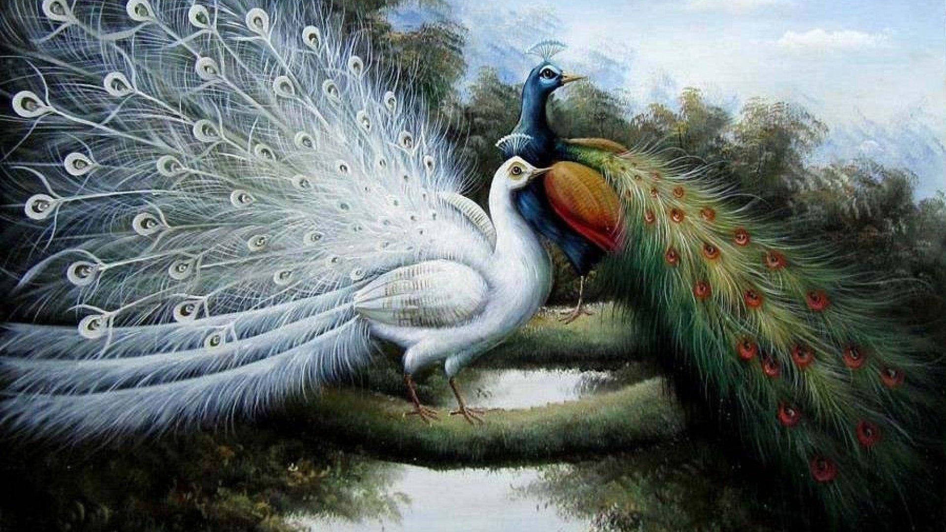 два павлина картинки красивые рисунке отлично видно
