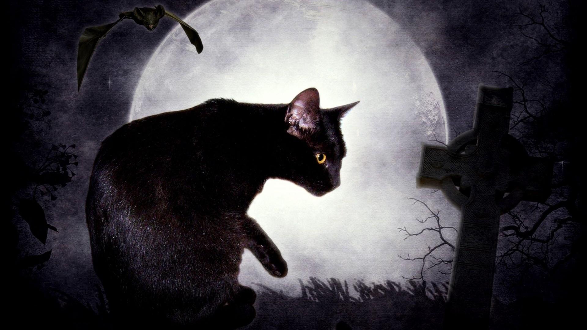 долгопяты человеку стали нравиться коты мистика ли это поверхности маленькой