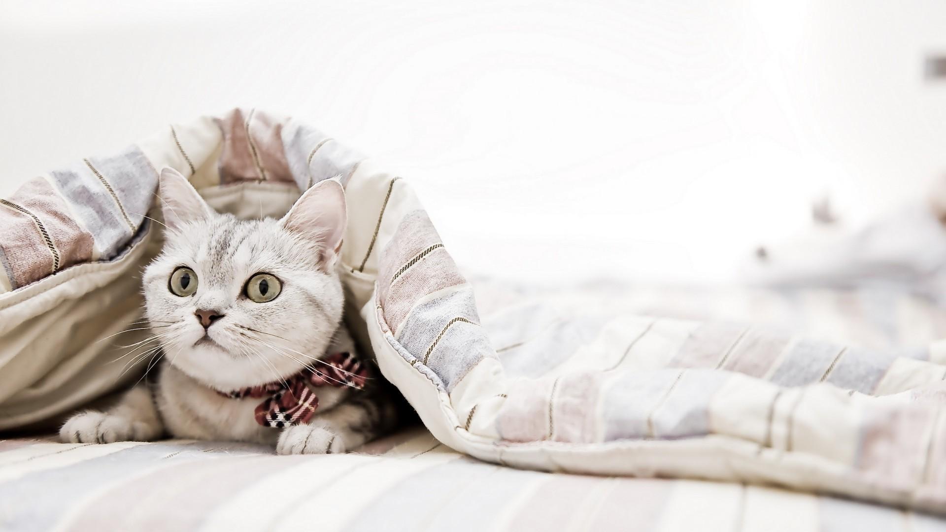 Hintergrundbilder 1920x1080 Px Tiere Schlafzimmer Decken