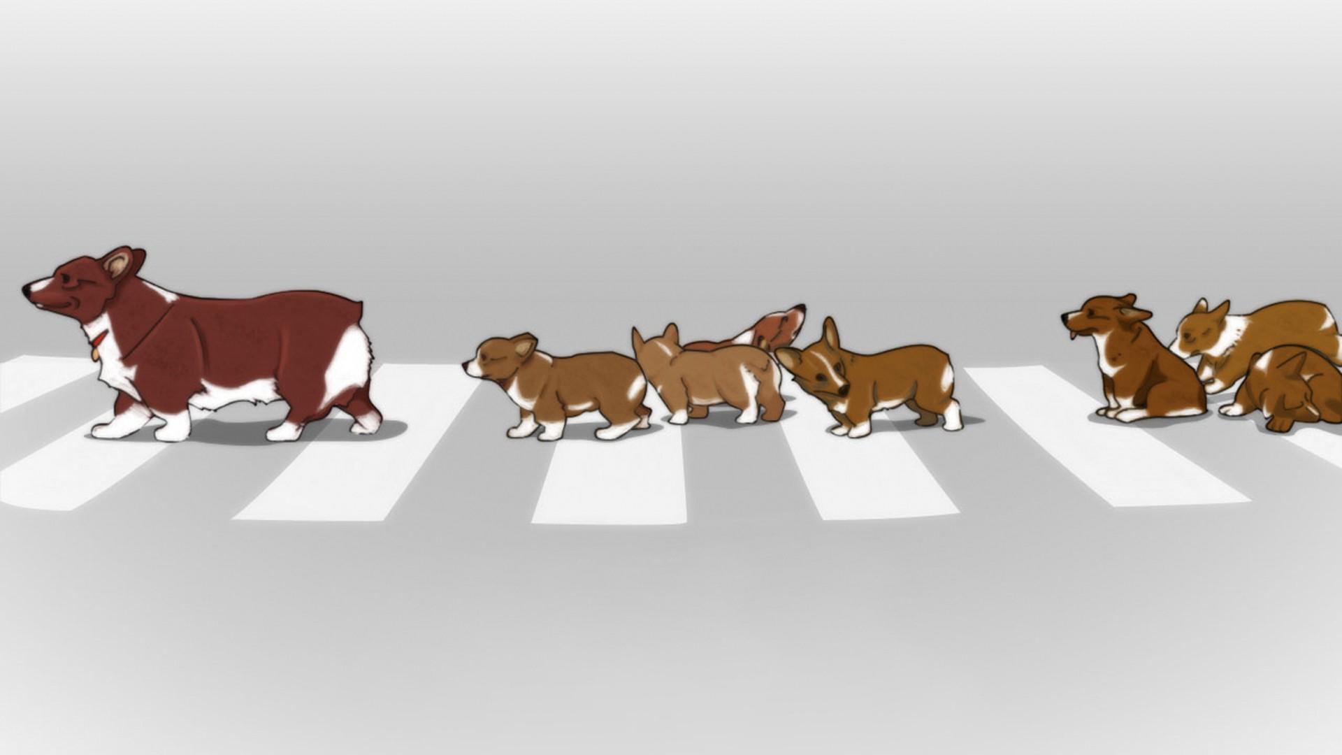 Wallpaper 1920x1080 Px Animals Cowboy Bebop Dog Ein 1920x1080