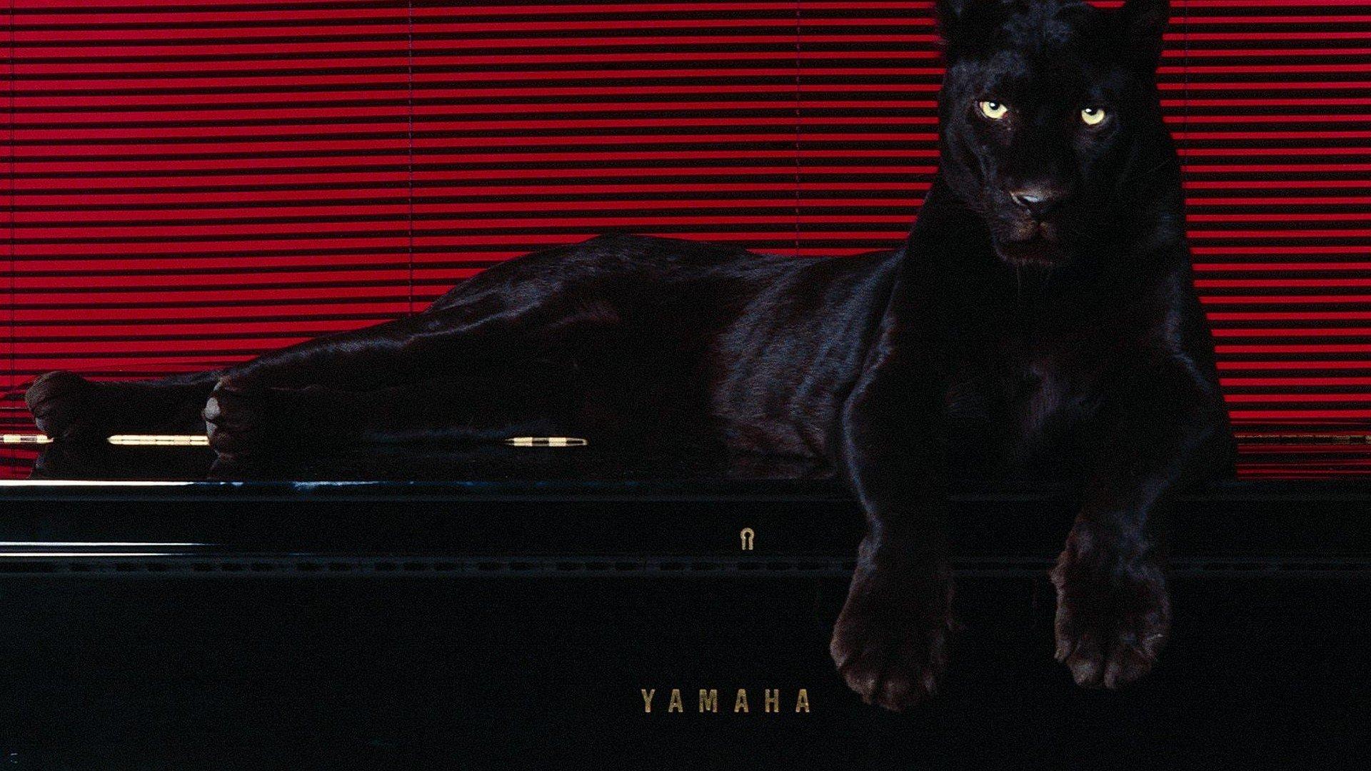Wallpaper 1920x1080 Px Animals Pantera Puma 1920x1080