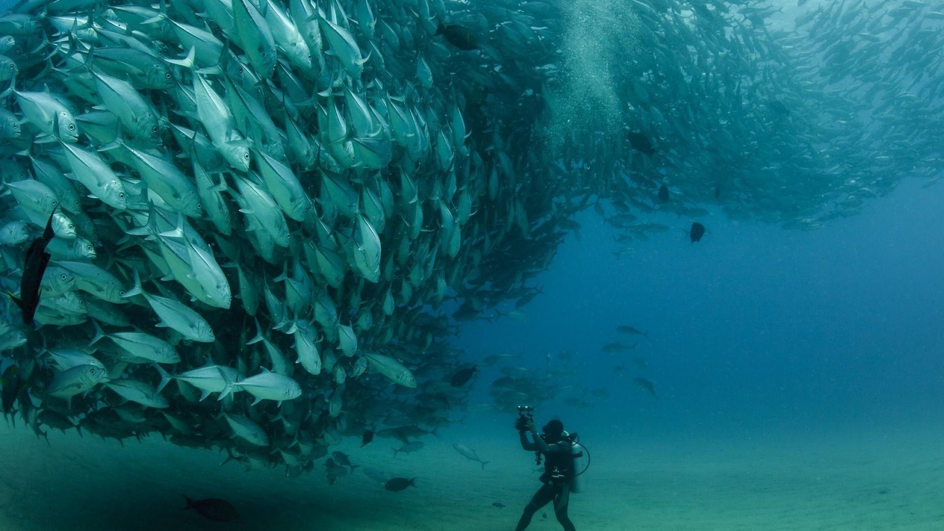 1920x1080 Px Animals Fish Nature Photography Scuba Diving Sea