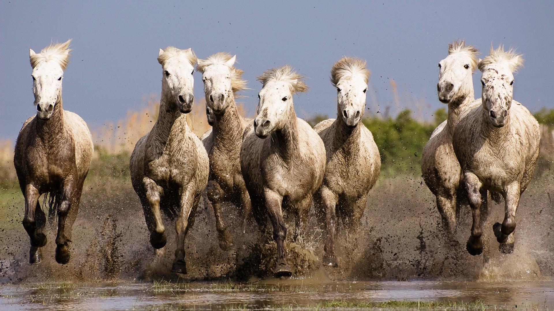 Wallpaper 1920x1080 Px Animals Horse Nature Running