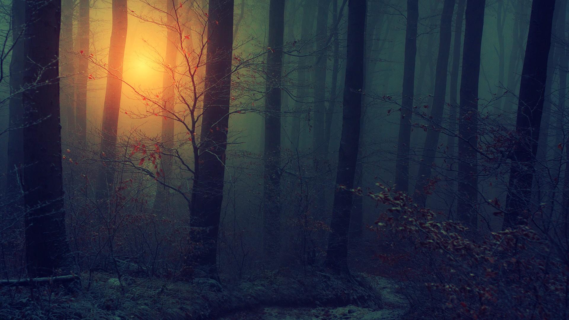 Wallpaper 1920x1080 Px Autumn Bark Dark Fall Floor Fog Forests Haze Landscapes Leaves Mist Mood Nature Seasons Spooky Sun Sunlight Sunrise Sunset Trees Wood 1920x1080 Wallbase 1719621 Hd Wallpapers Wallhere