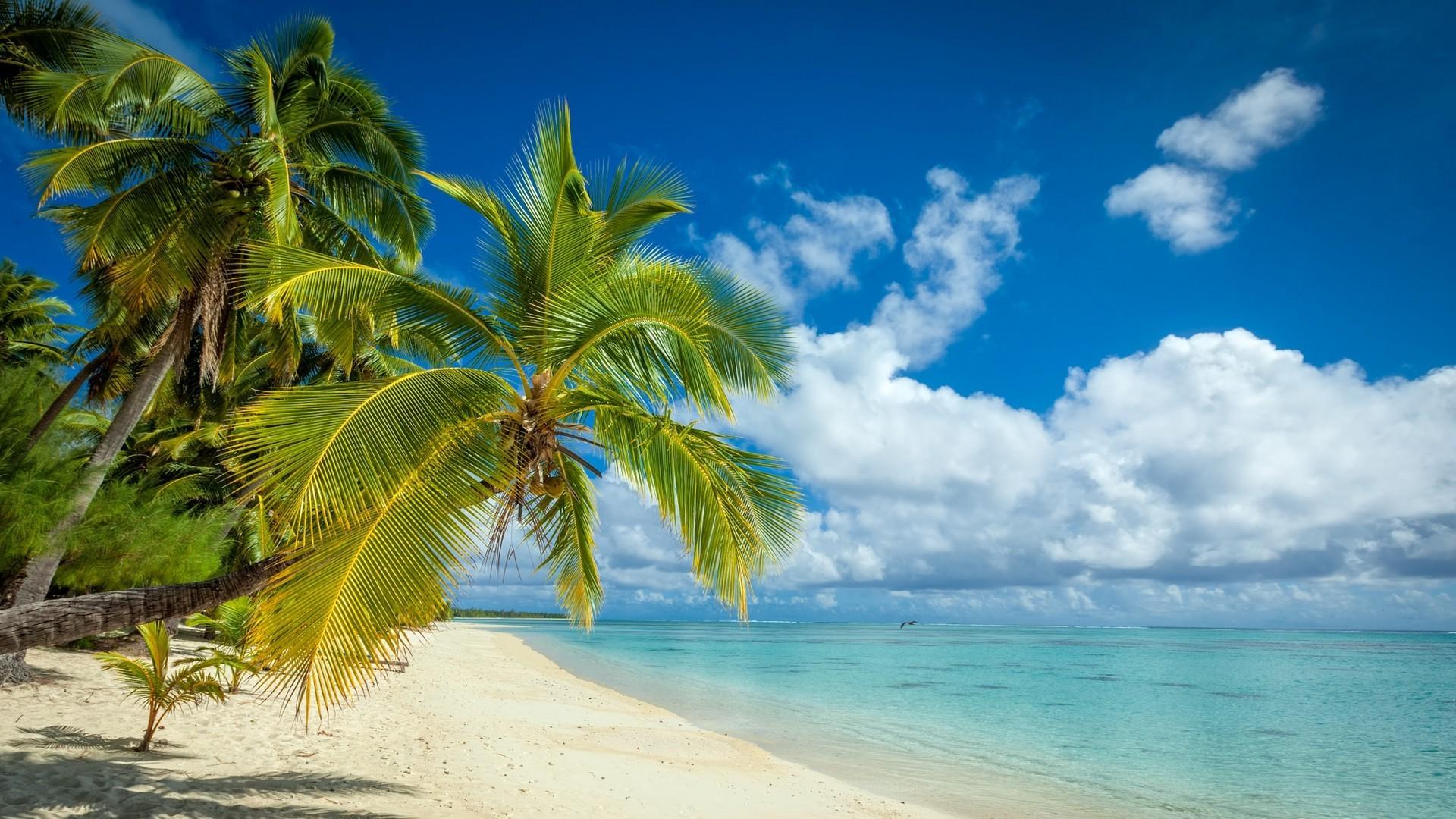 Hd Coconut Tree Seaside Landscape Nature Wallpaper Living: Sfondi : 1920x1080 Px, Spiaggia, Nuvole, Isola, Paesaggio