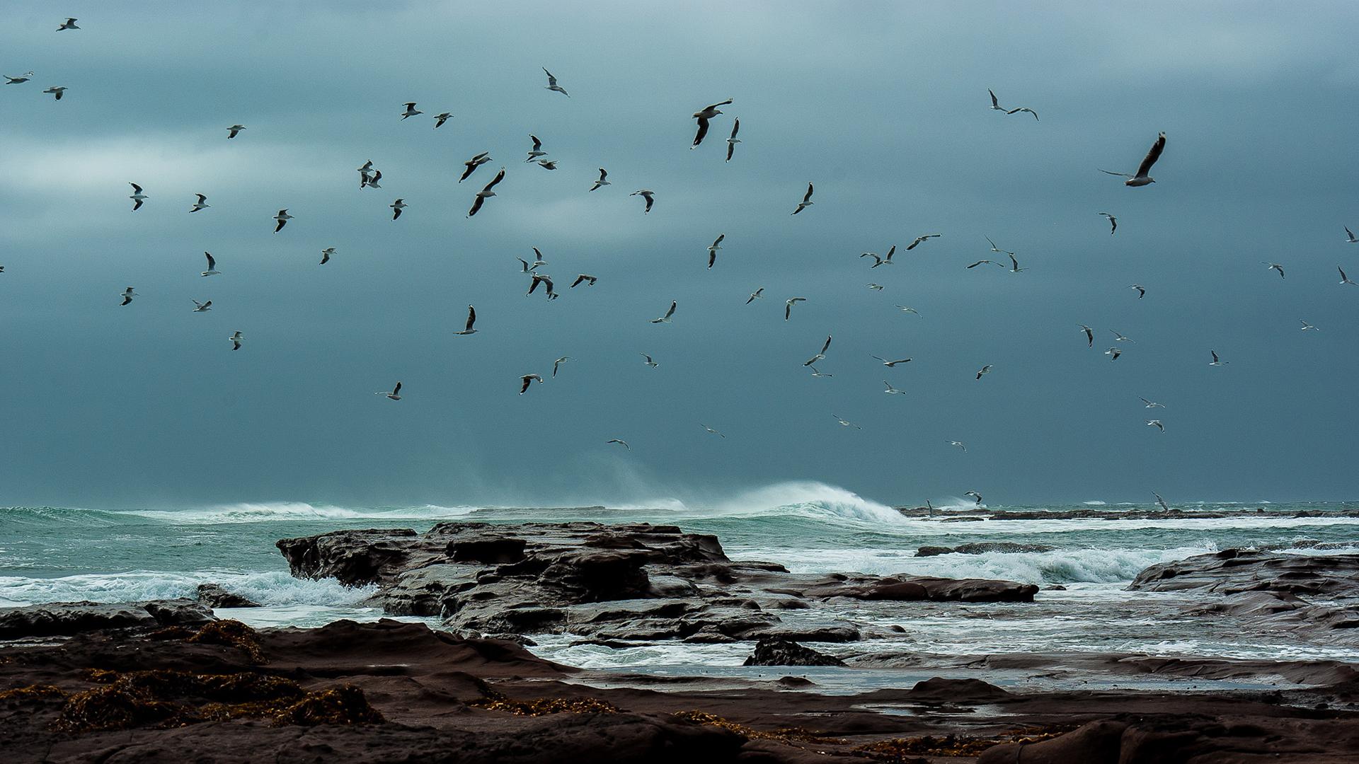 Wallpaper 1920x1080 Px Beaches Flight Fly Gulls