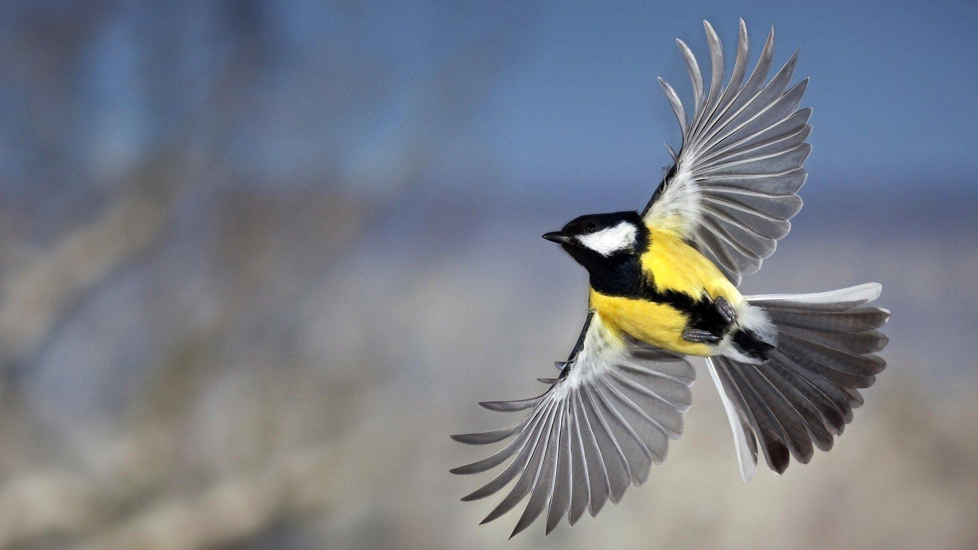 некоторых пациентов изображение птиц на фото картинках непромышленные объекты будут