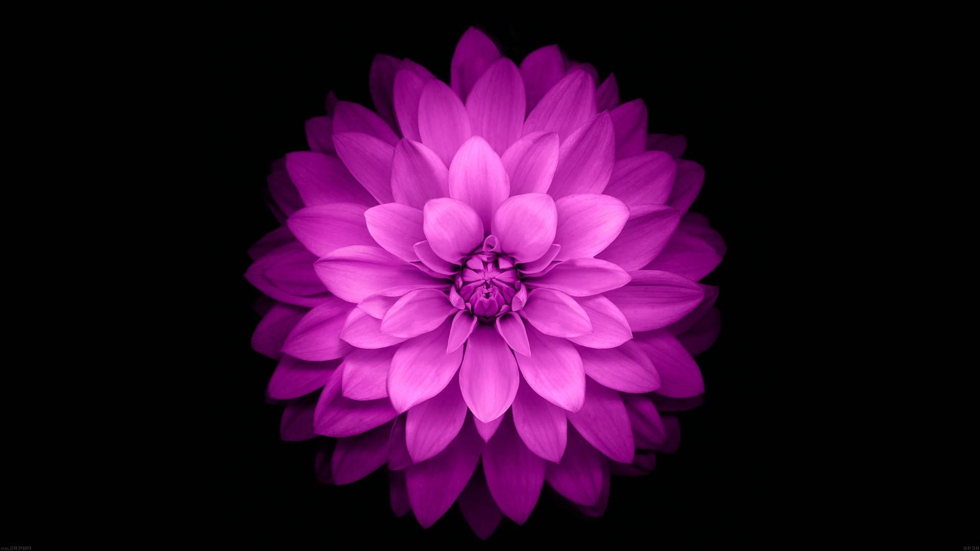 картинки цветка как на айфоне службе