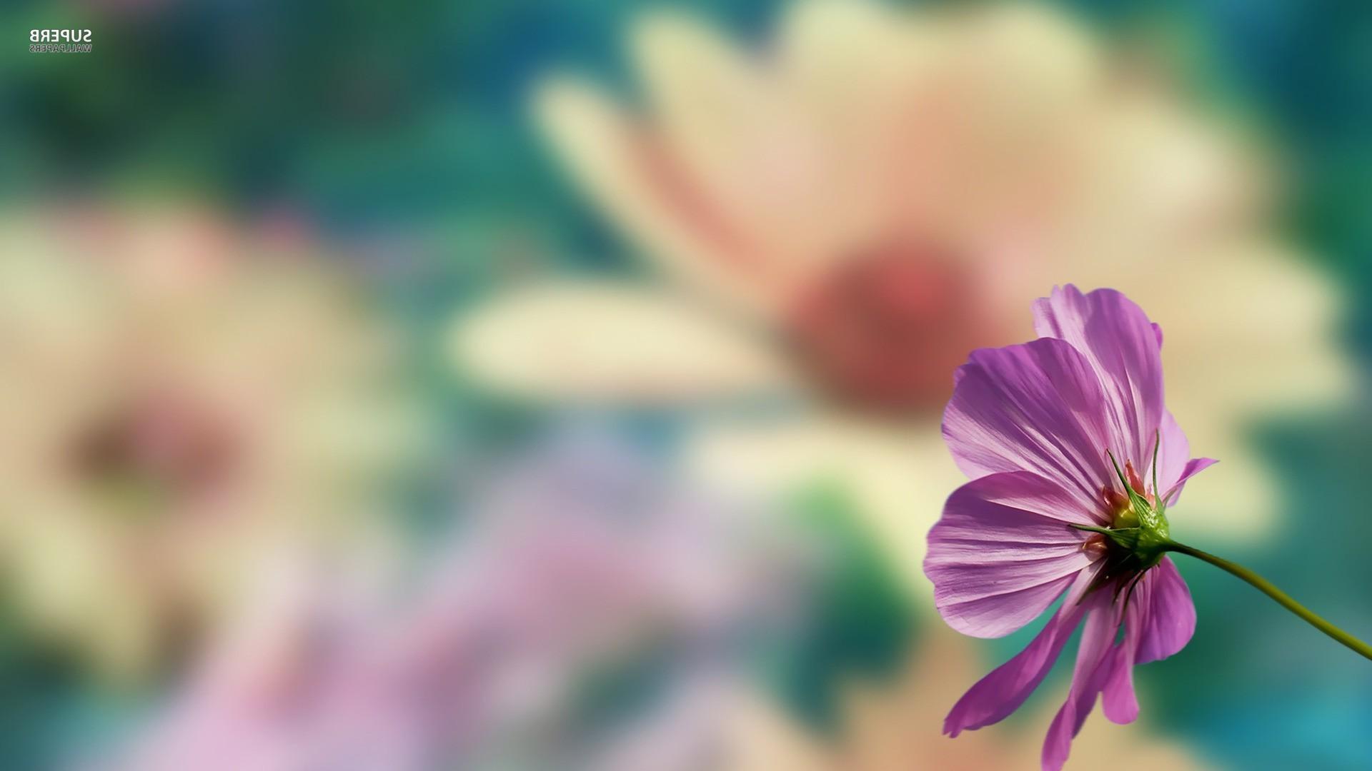 wallpaper 1920x1080 px blurred pink flowers 1920x1080