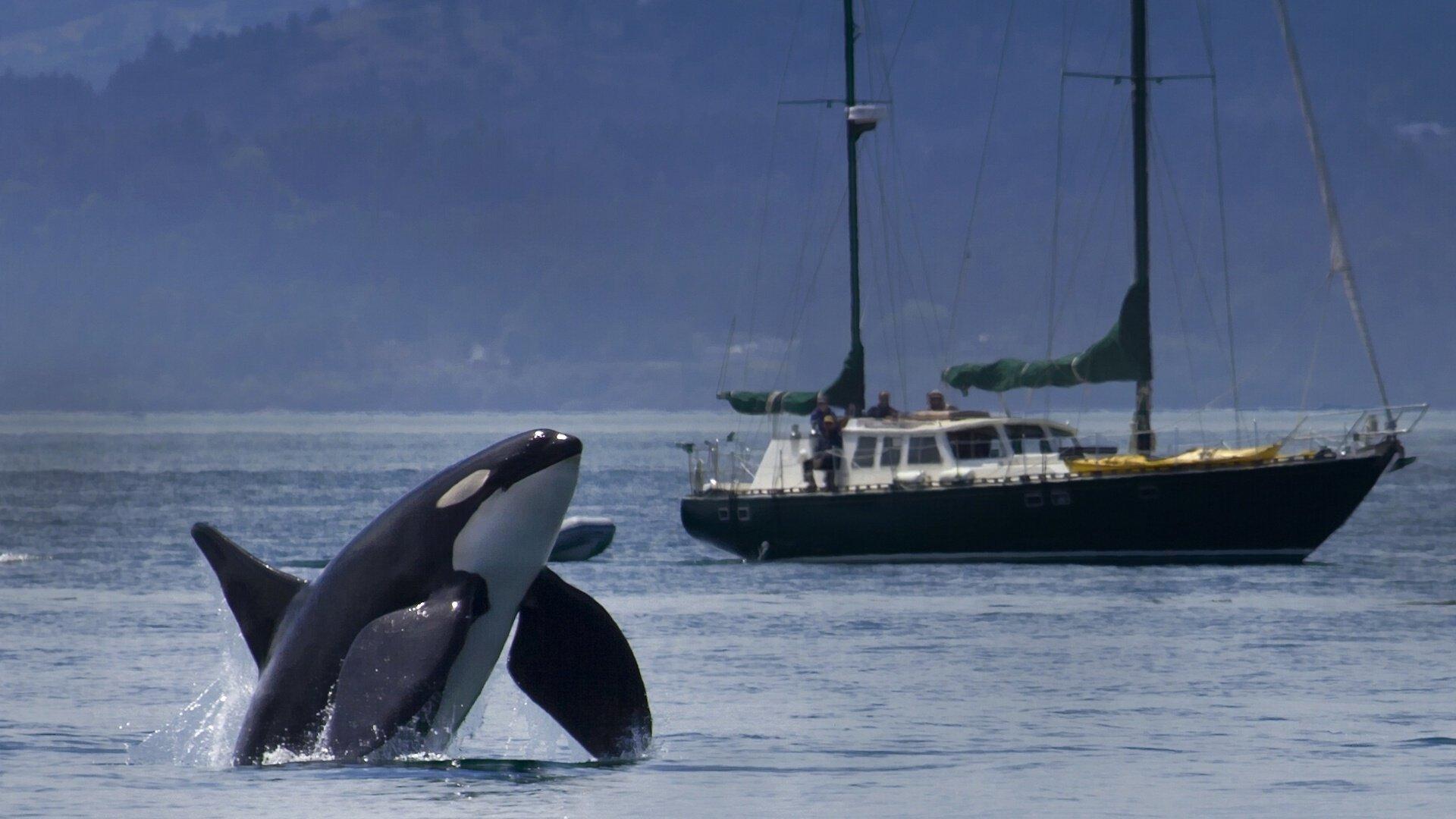 Wallpaper 1920x1080 Px Boat Killer Orca Ship Whale