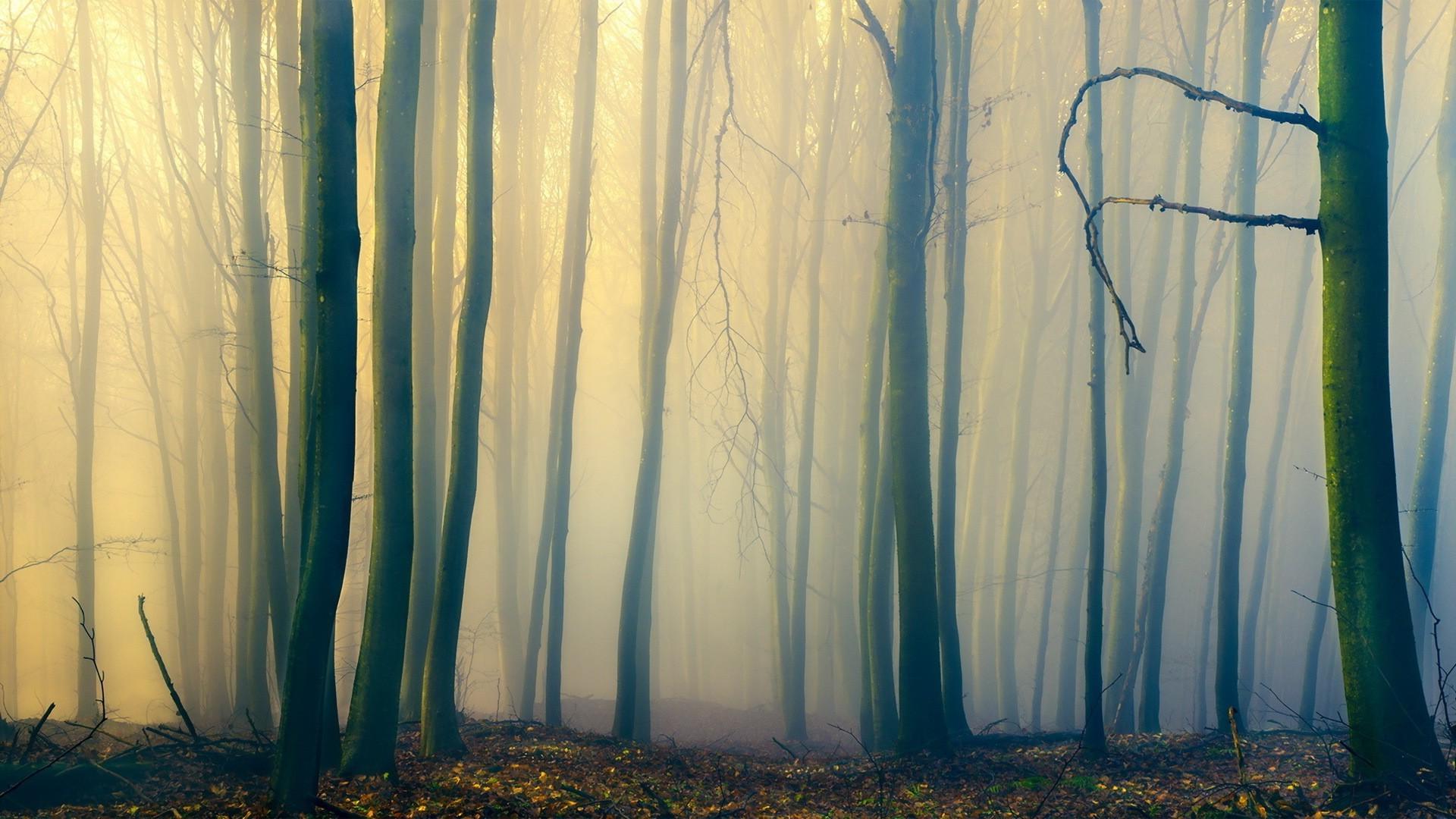 белье фон туманный лес состояние