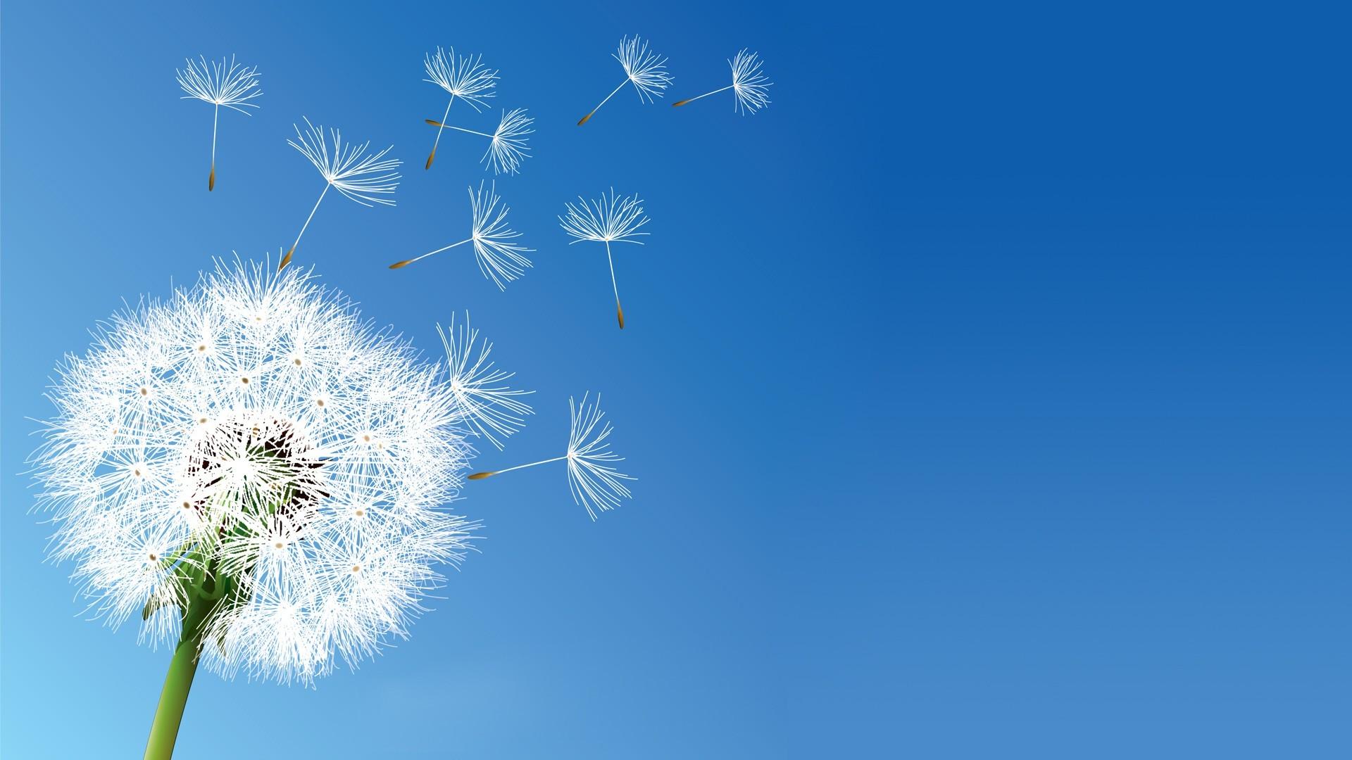 1920x1080 Px Clear Sky Dandelion Flowers Nature X