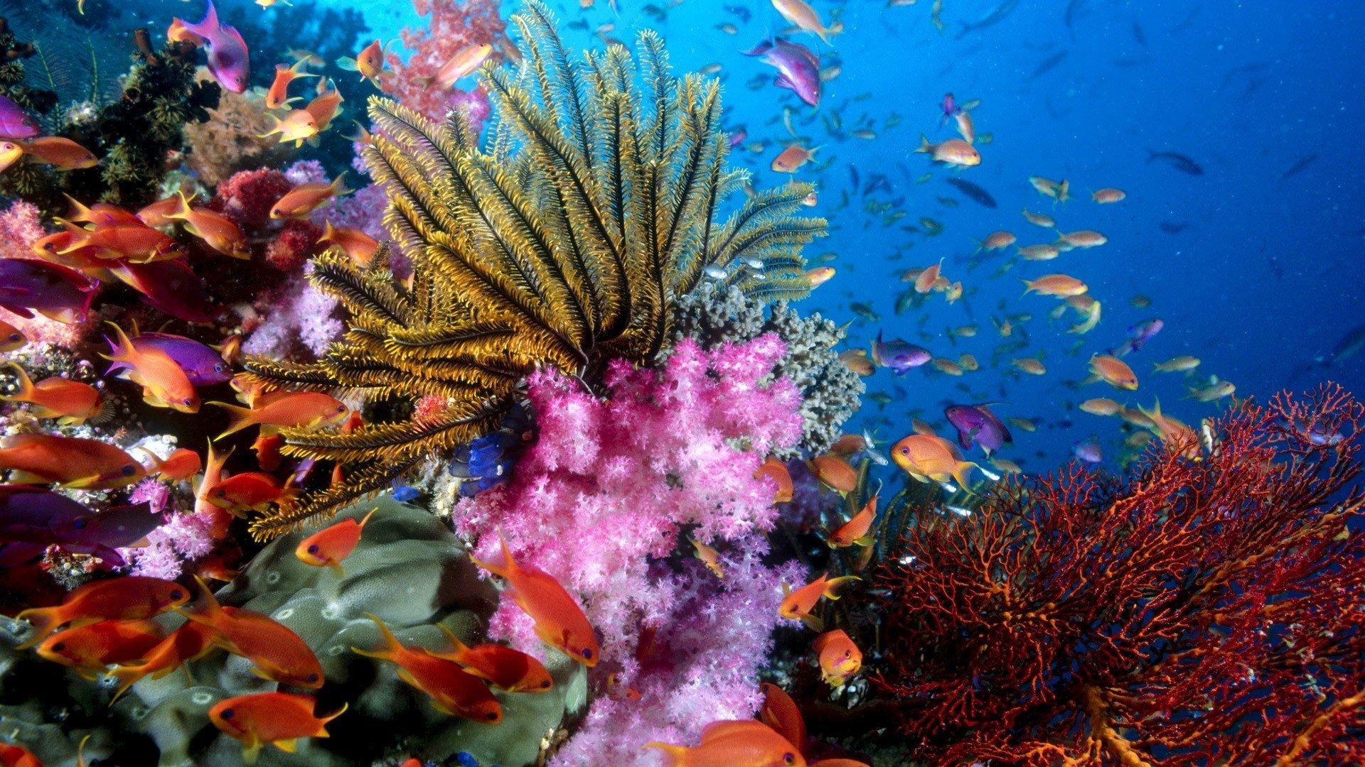Самые экзотические цветы мира фото для фото