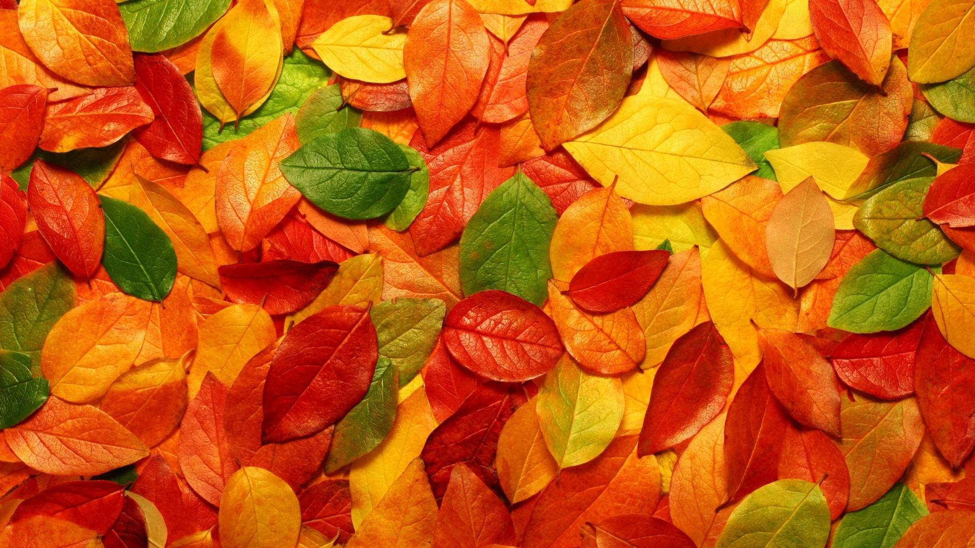 Осенние листья обои для рабочего стола бесплатно