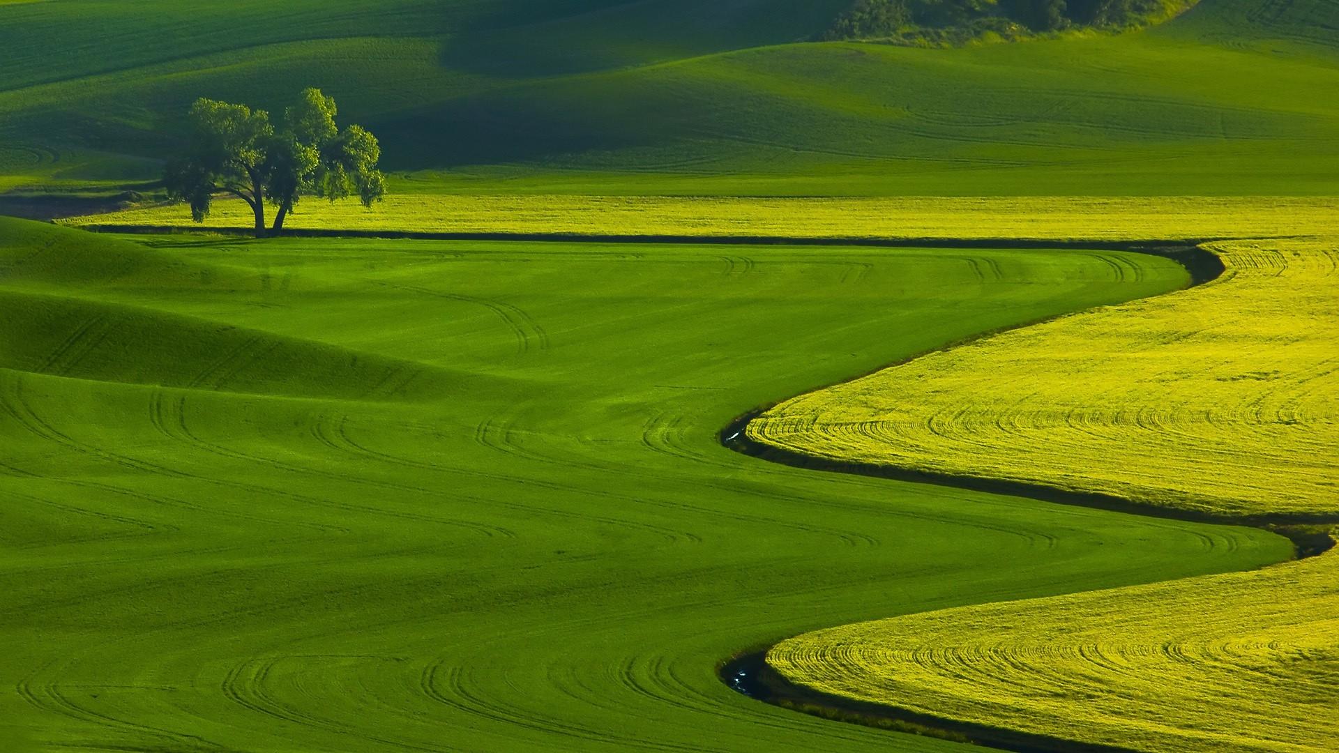 Картинки рабочий стол зеленое поле