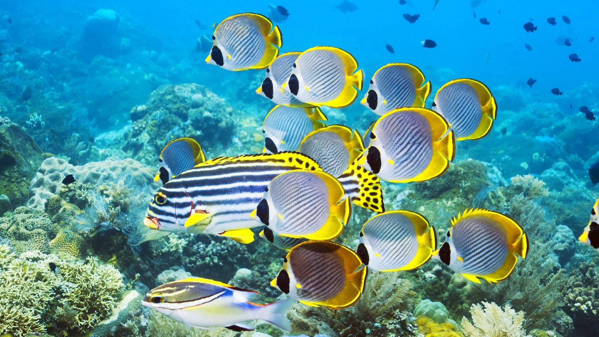 Картинки из морских ракушек фото окне можно