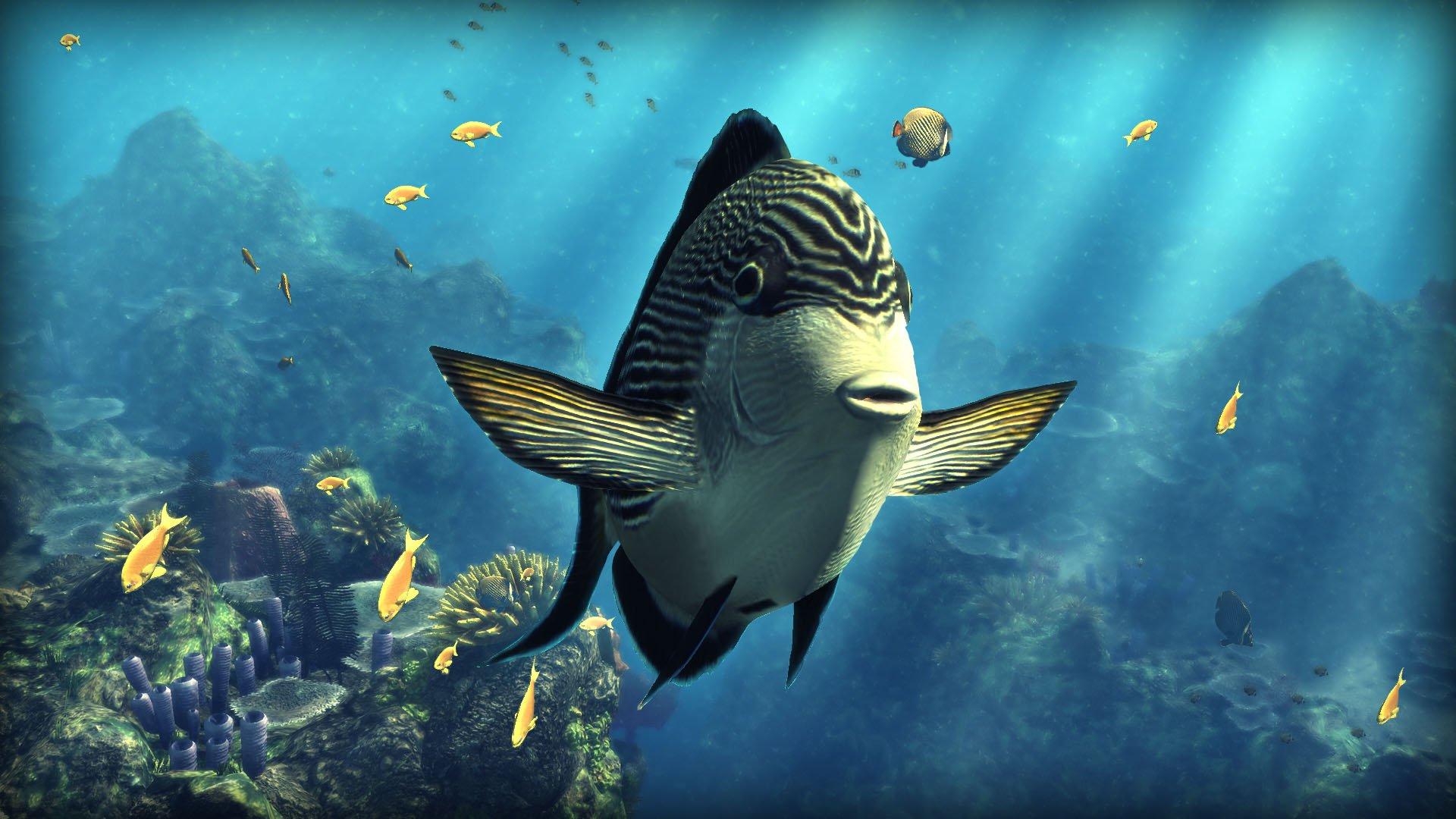 картинки как в реальной жизни выглядит океан с рыбами только