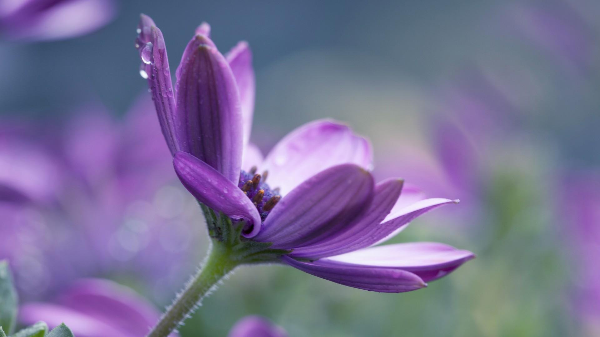 Картинка фиолетовый цветок