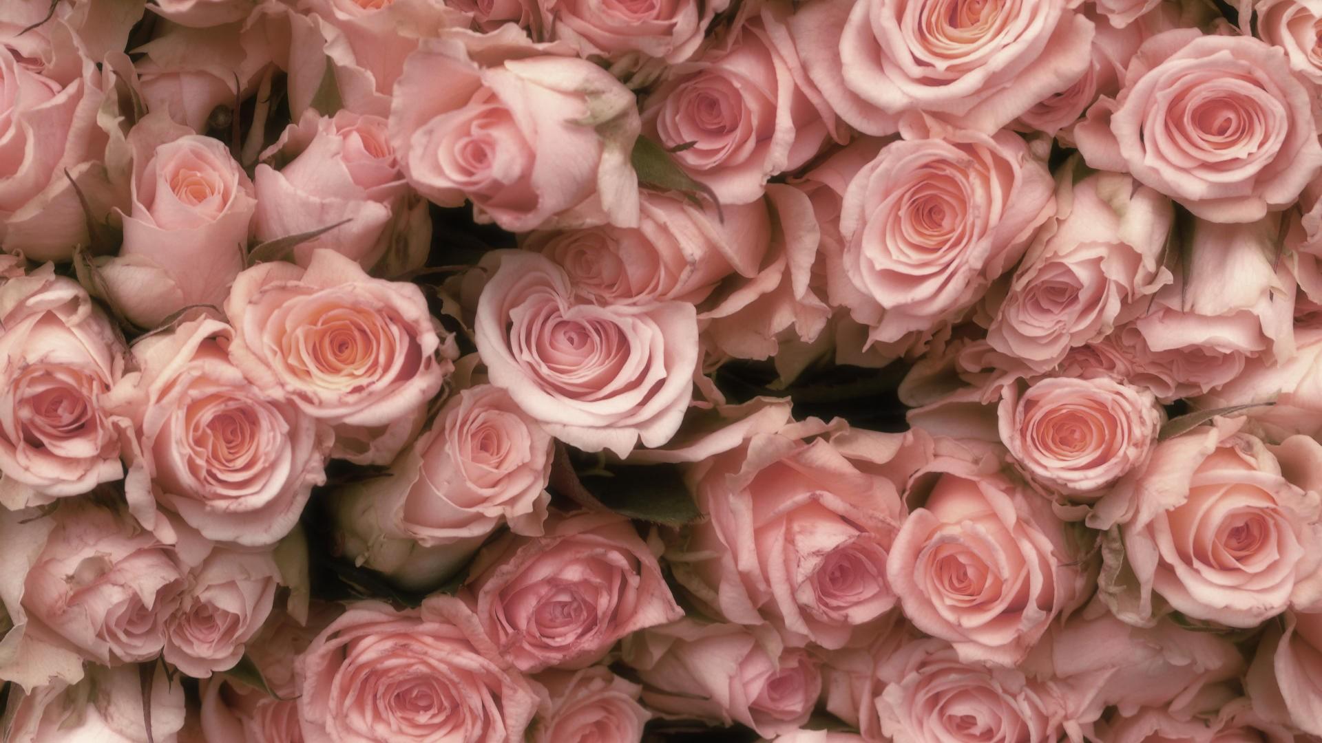этой картинки на экран цветы розы огурчики по-тираспольски сегодня