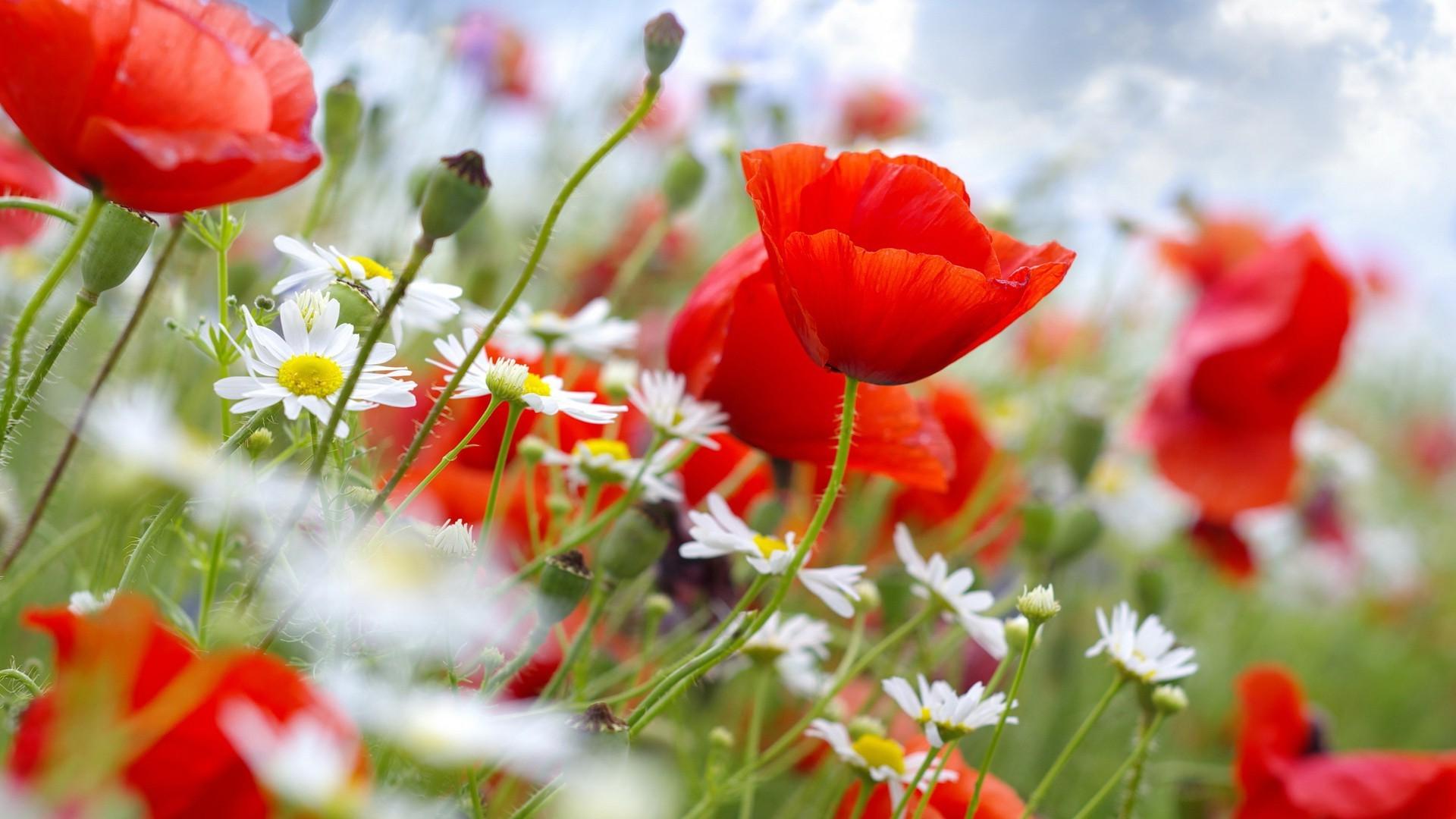 красивые широкоформатные обои на рабочий стол высокого качества цветы № 230360  скачать