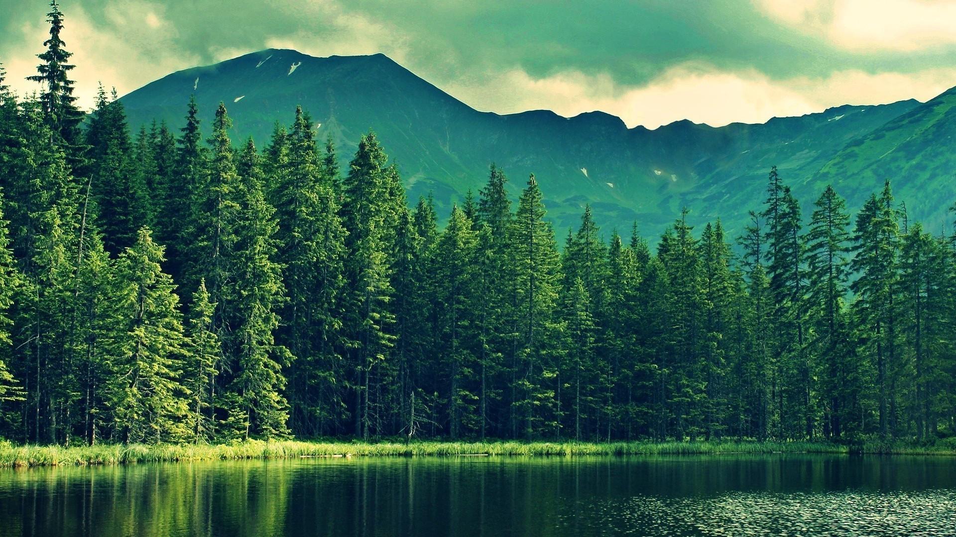 Fond d'écran : 1920x1080 px, forêt, Lac, la nature 1920x1080 - wallhaven - 1045037 - Fond d ...