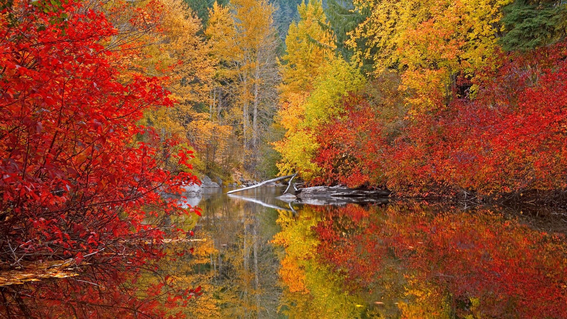 Обои широкоформатные на рабочий стол бесплатно красивая природа осень