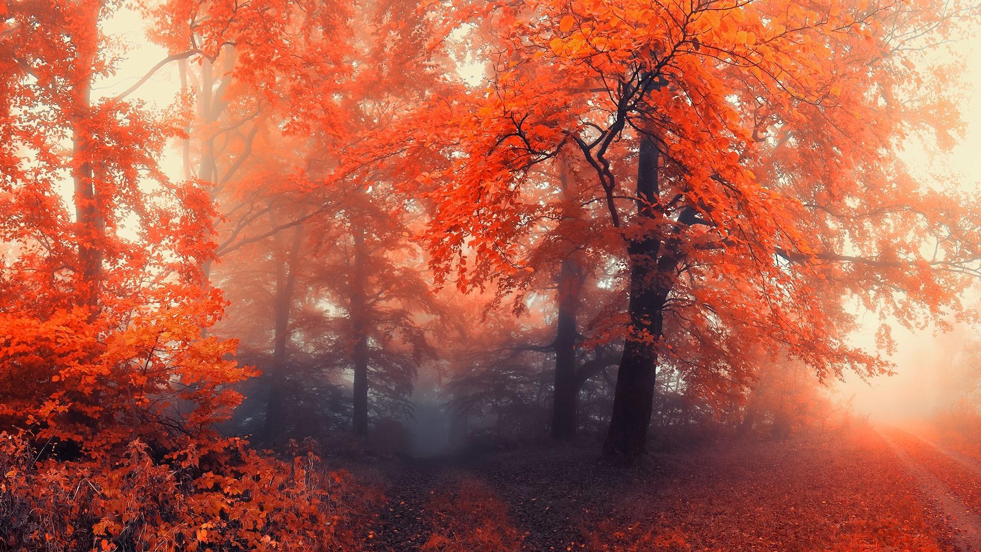 любви осень фотки на рабочий стол дома