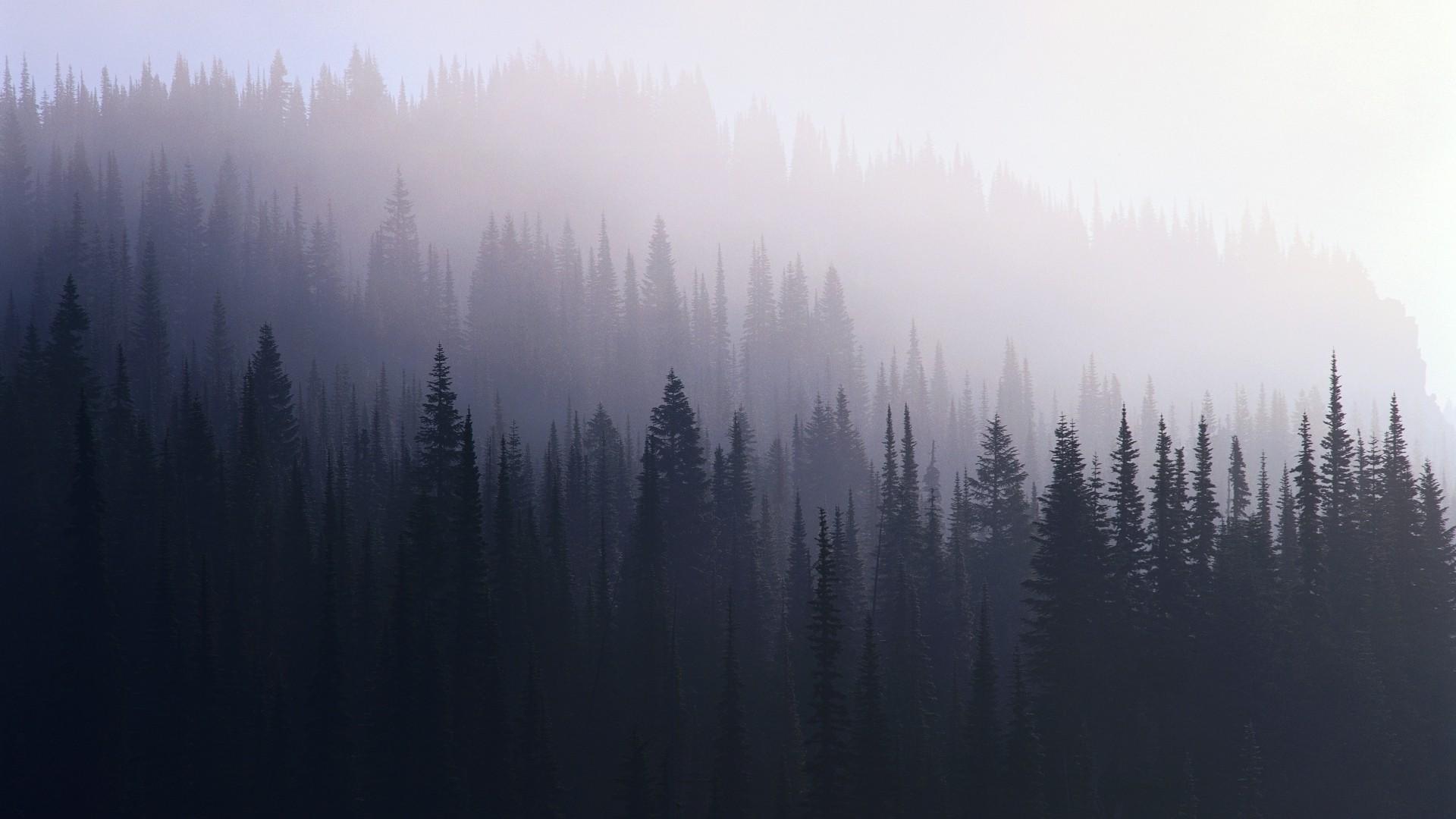 wallpaper 1920x1080 px forest mist trees 1920x1080 goodfon