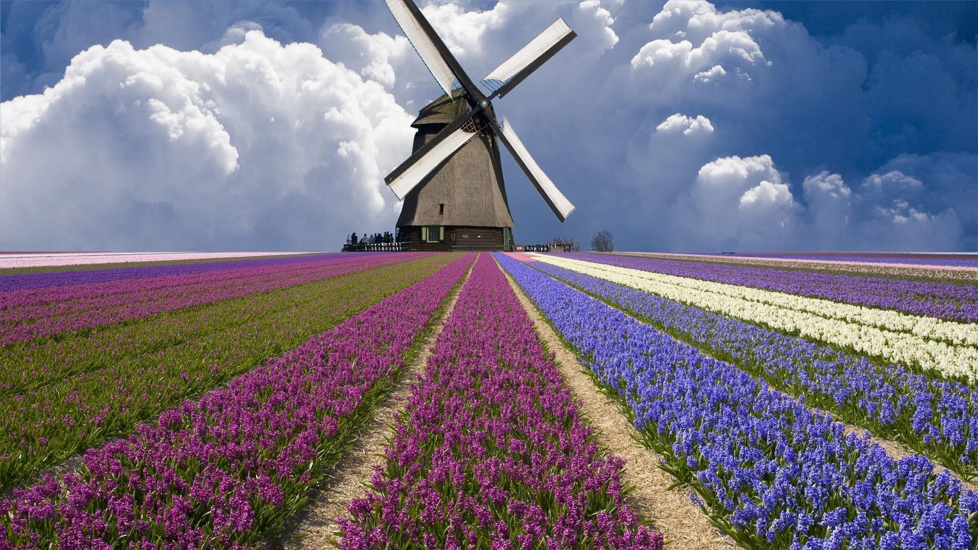 fond d'ecran gratuit moulin a vent