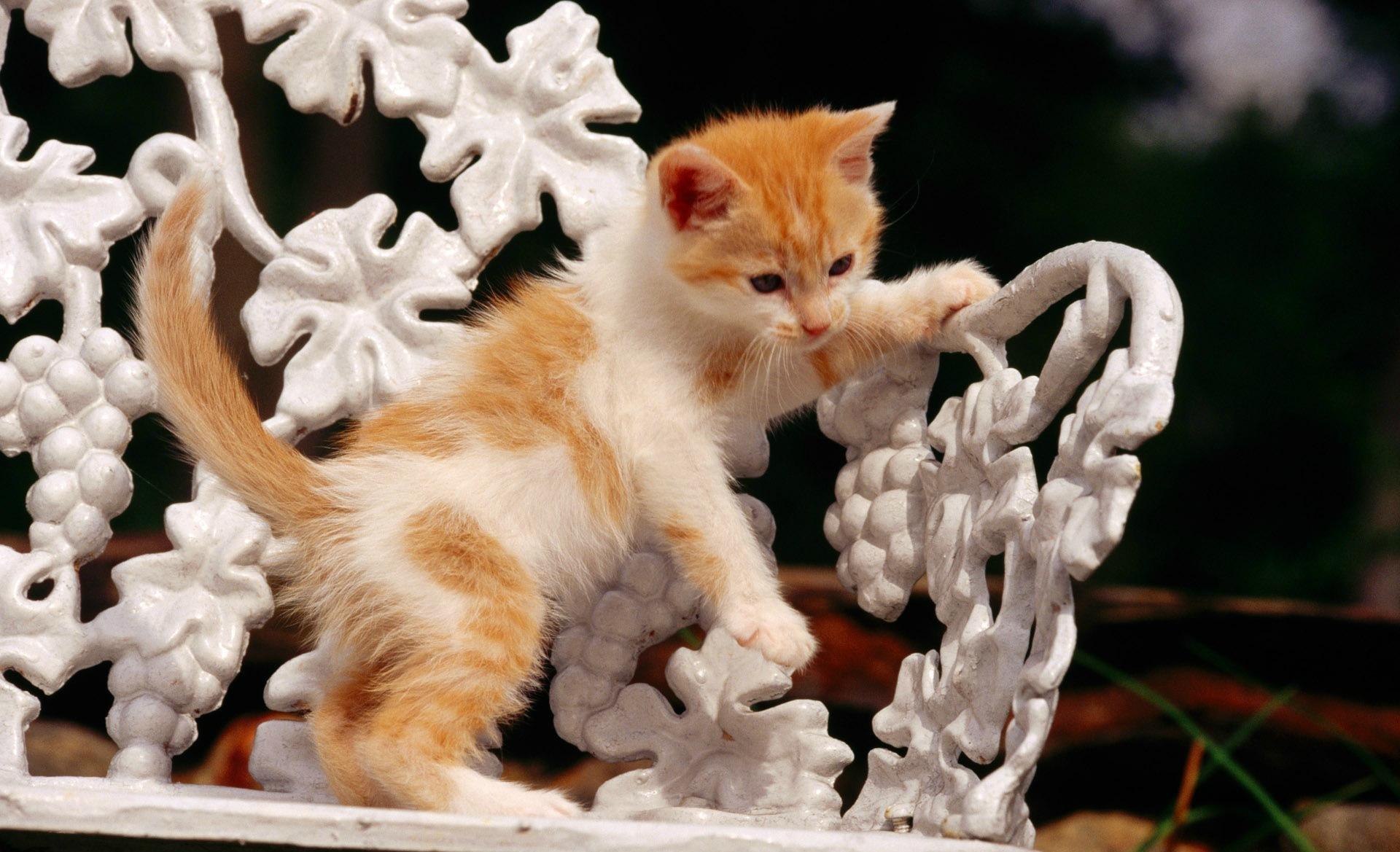 история фото красивых котиков со смыслом совмещает себе